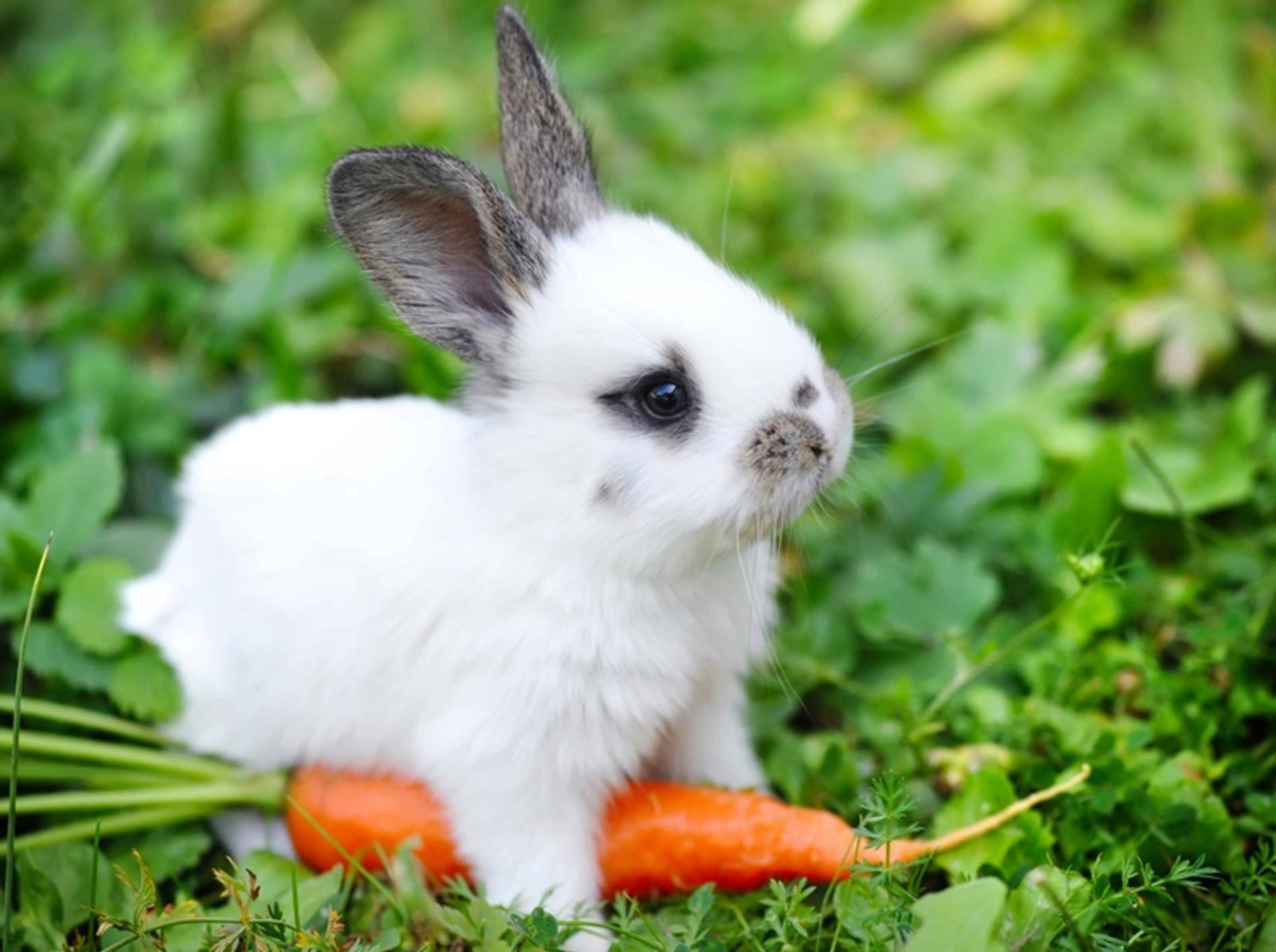 Kaninchen-Augen-Sehsinn