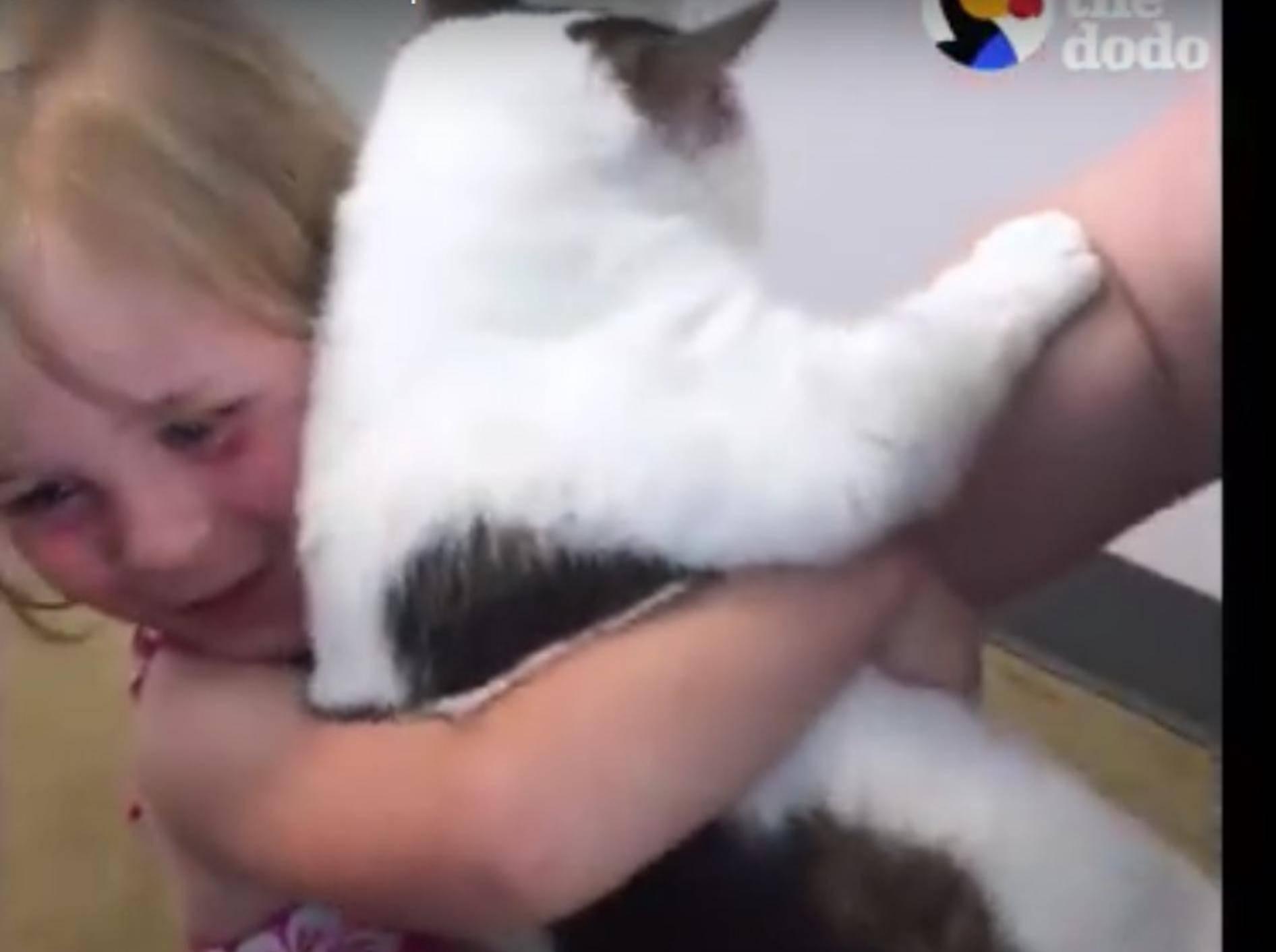 Endlich wieder zusammen nach 3 Jahren: Kater Cursor und seine kleine Freundin – YouTube / The Dodo