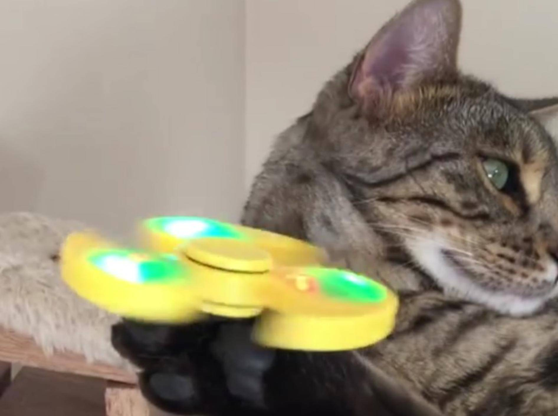 Für Boomer ist es ein kein Problem, den Spinner zu balancieren – YouTube / CATMANTOO