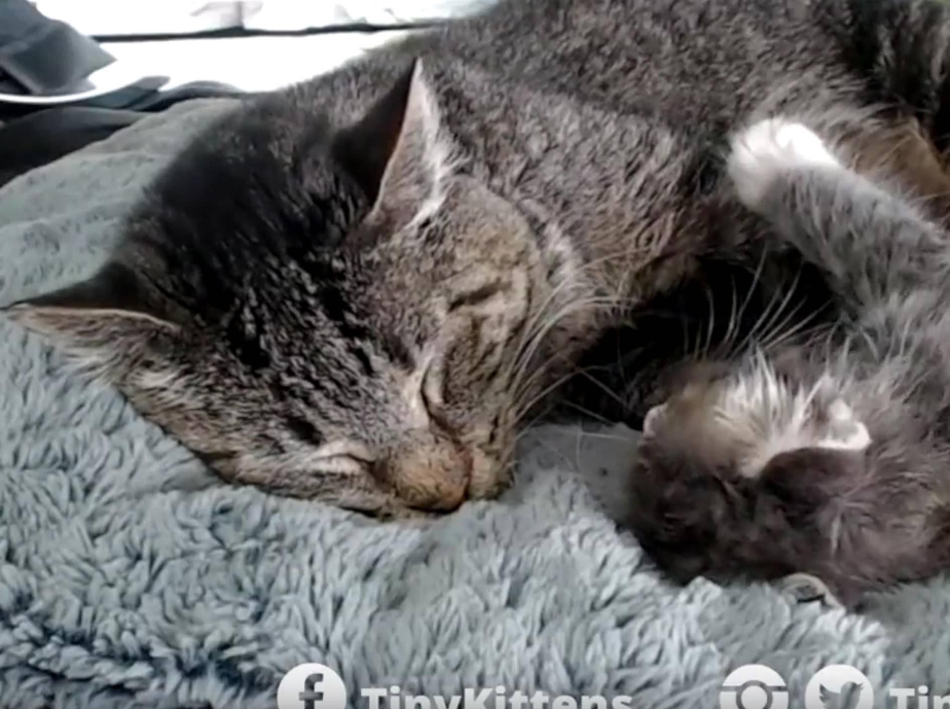Katzenopa Mason überschüttet Kätzchen Puck mit Liebe – YouTube / TinyKittens HQ
