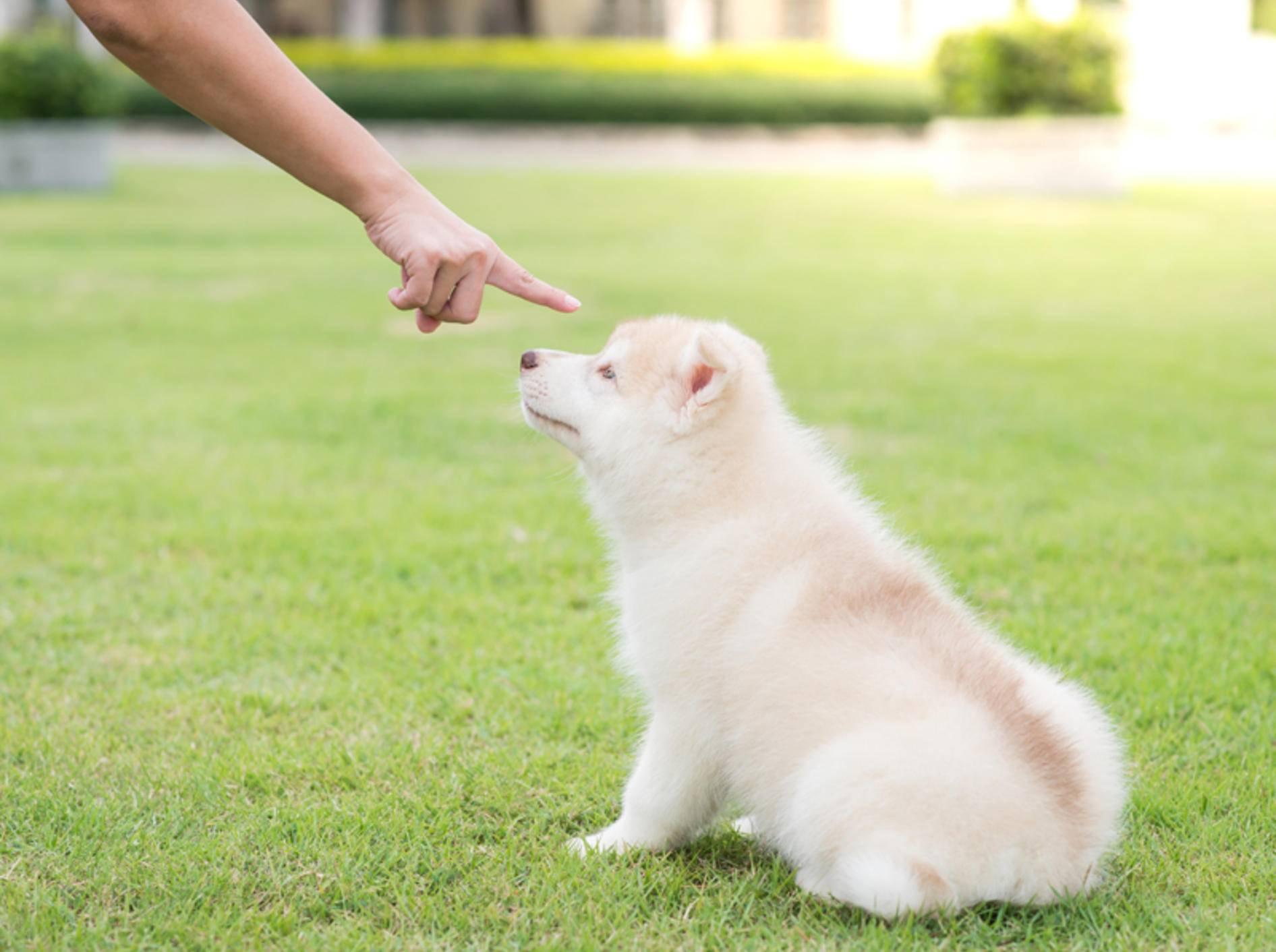 Hunde bestrafen ist nicht leicht, aber manchmal nötig – Shutterstock / ANURAK PONGPATIMET