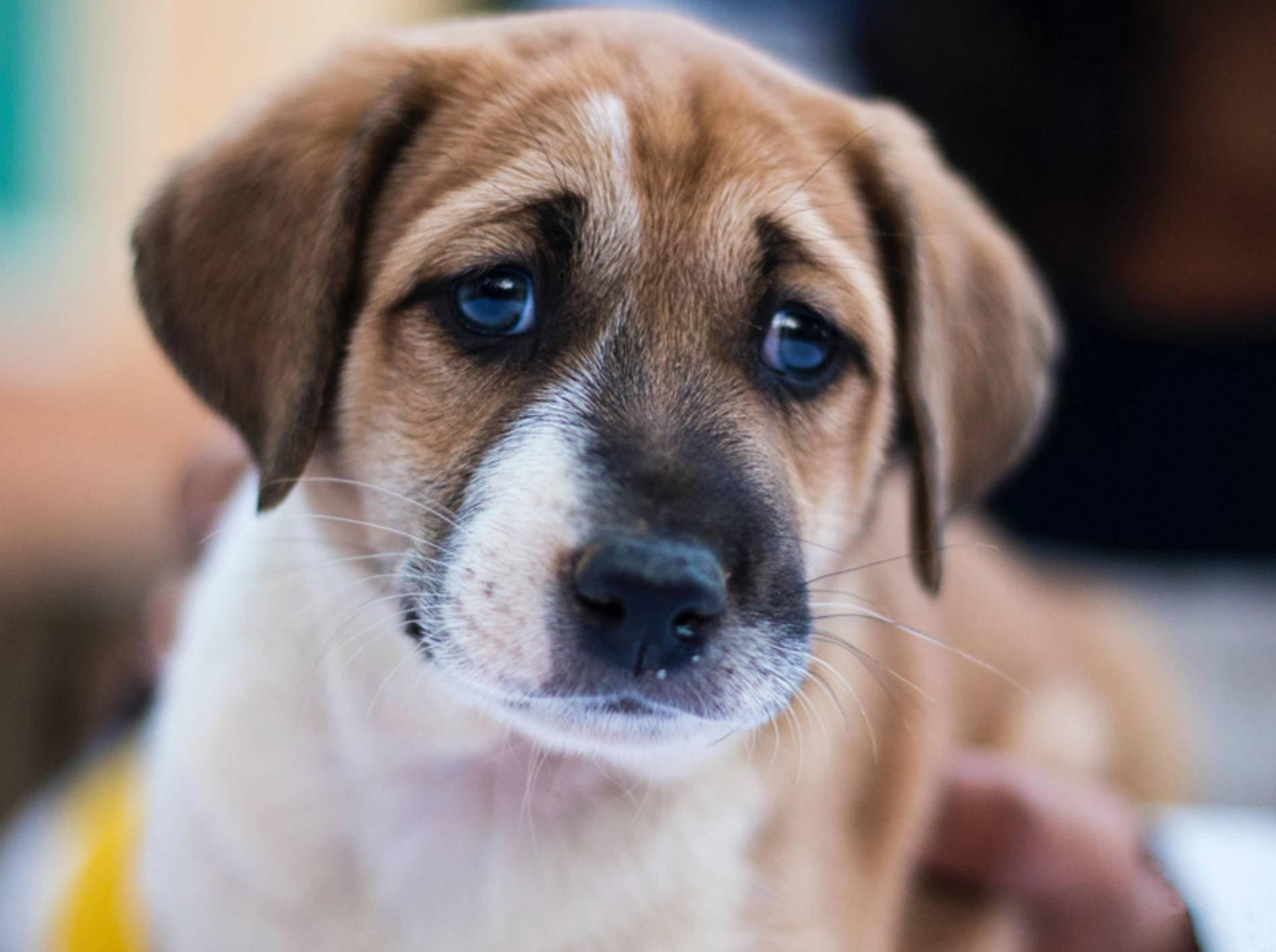 Trauer bei Hunden