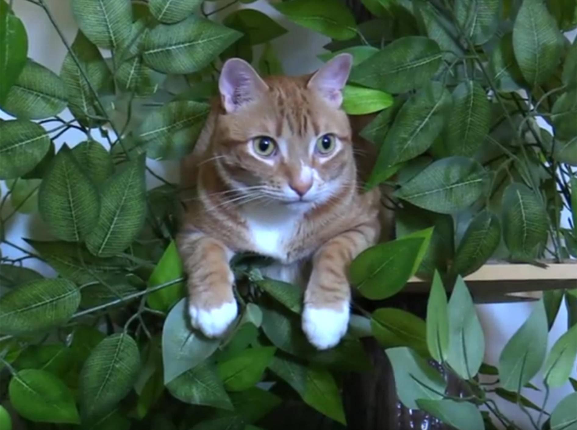 Cole und Marmalade erklären, warum Katzen Bäume lieben – YouTube / Cole and Marmalade
