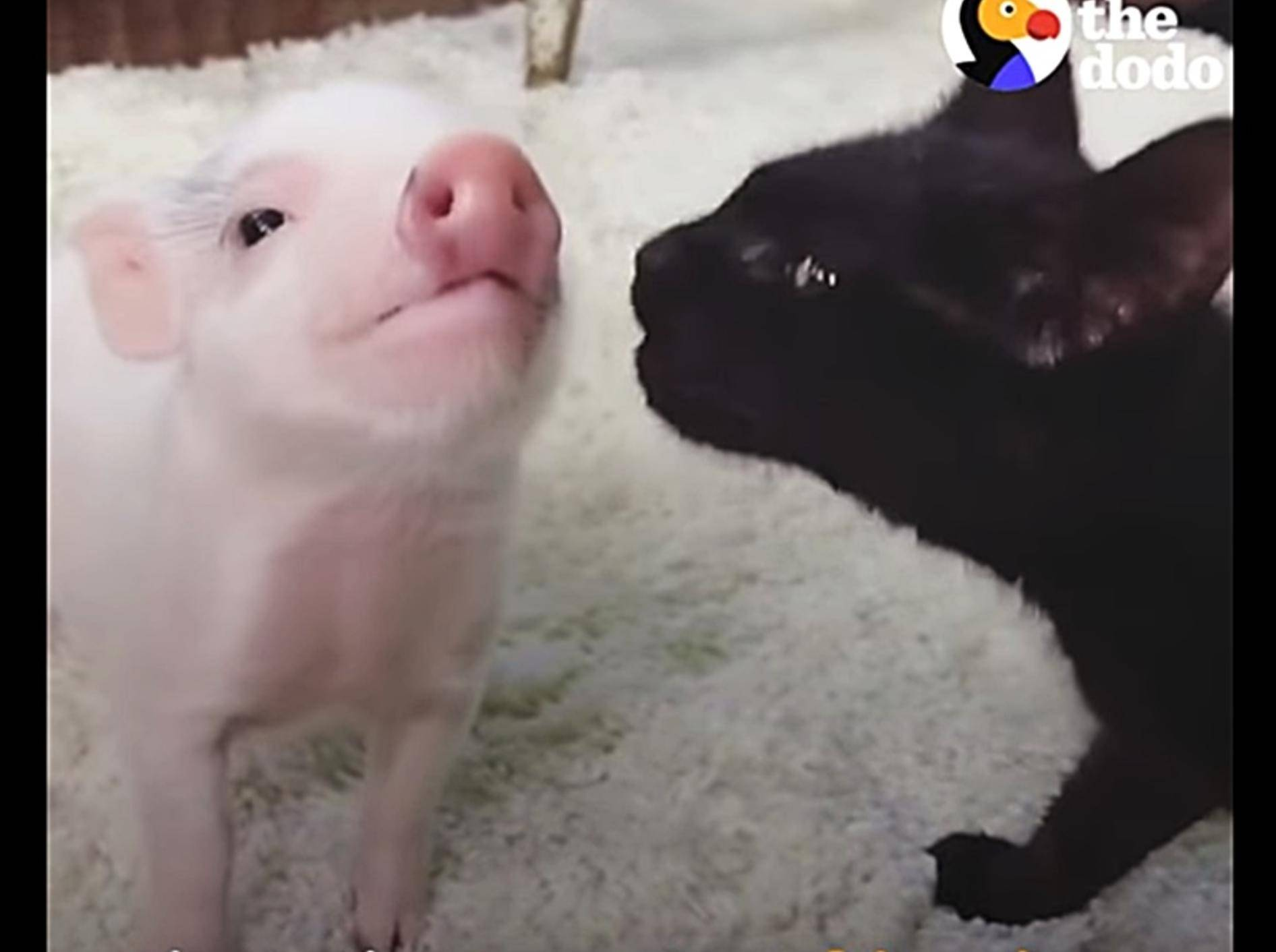 Schweinchen-und-Kaetzchen-wachsen-zusammen-auf