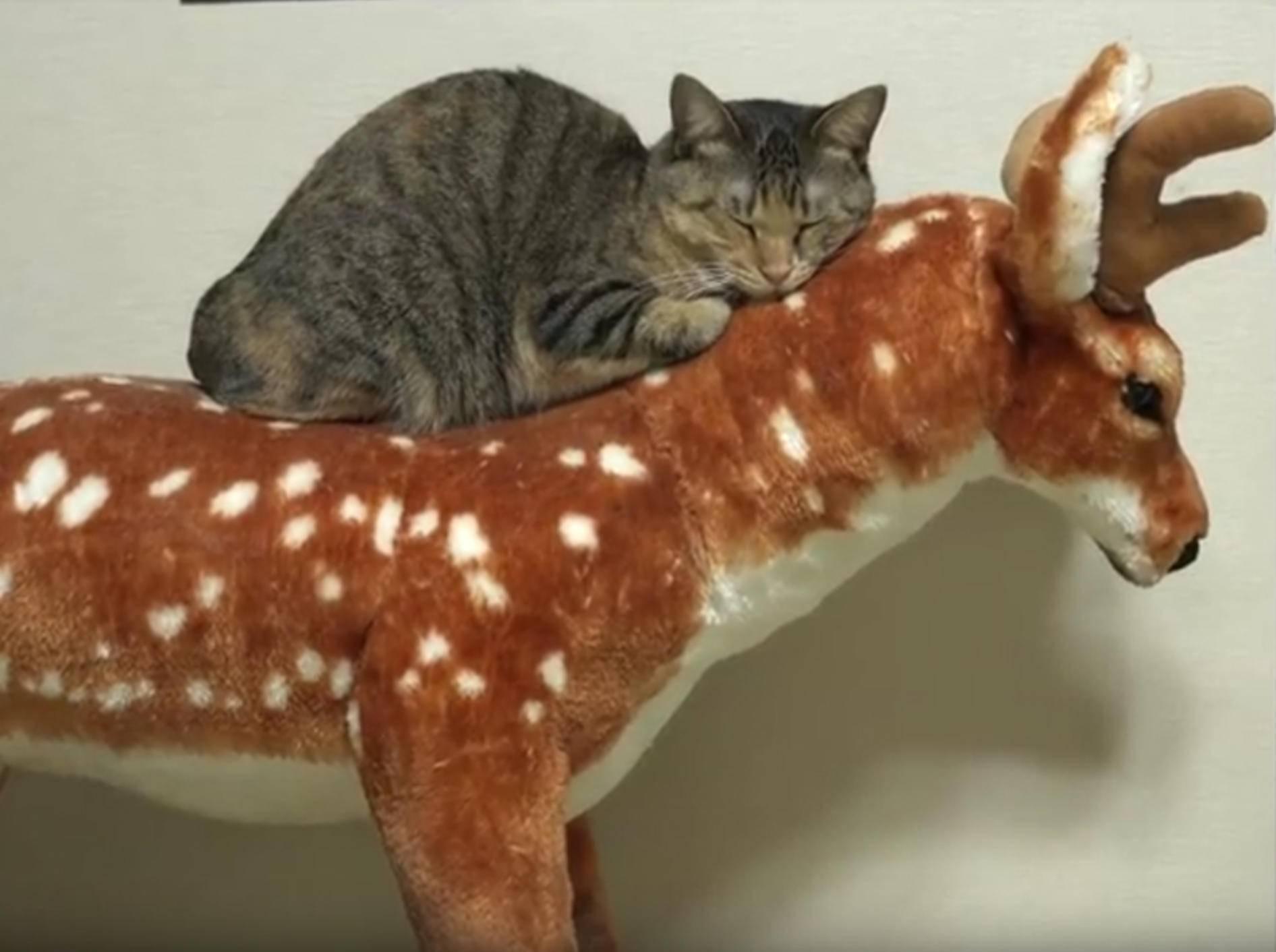 Japanische Katzen-WG freut sich über Stoffhirsch – YouTube / 10 Cats.
