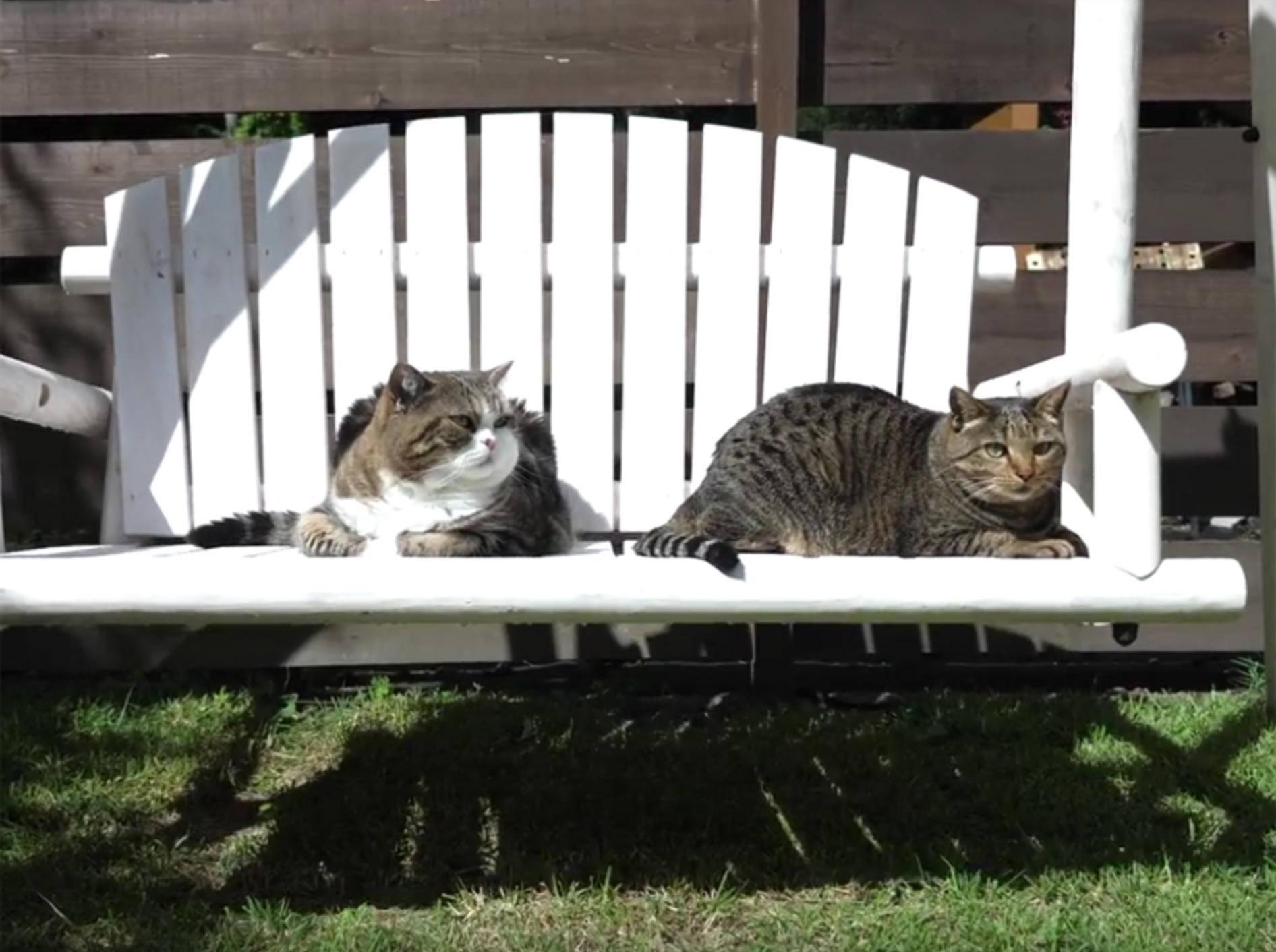 Maru & Hana finden Gartenschaukel richtig klasse! – YouTube / mugumogu