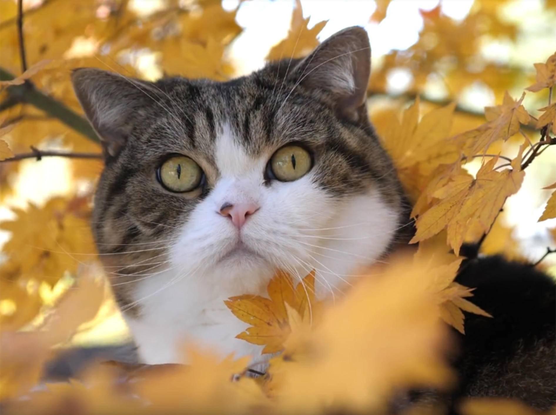 Herbstimpressionen mit Maru & Hana – YouTube / mugumogu