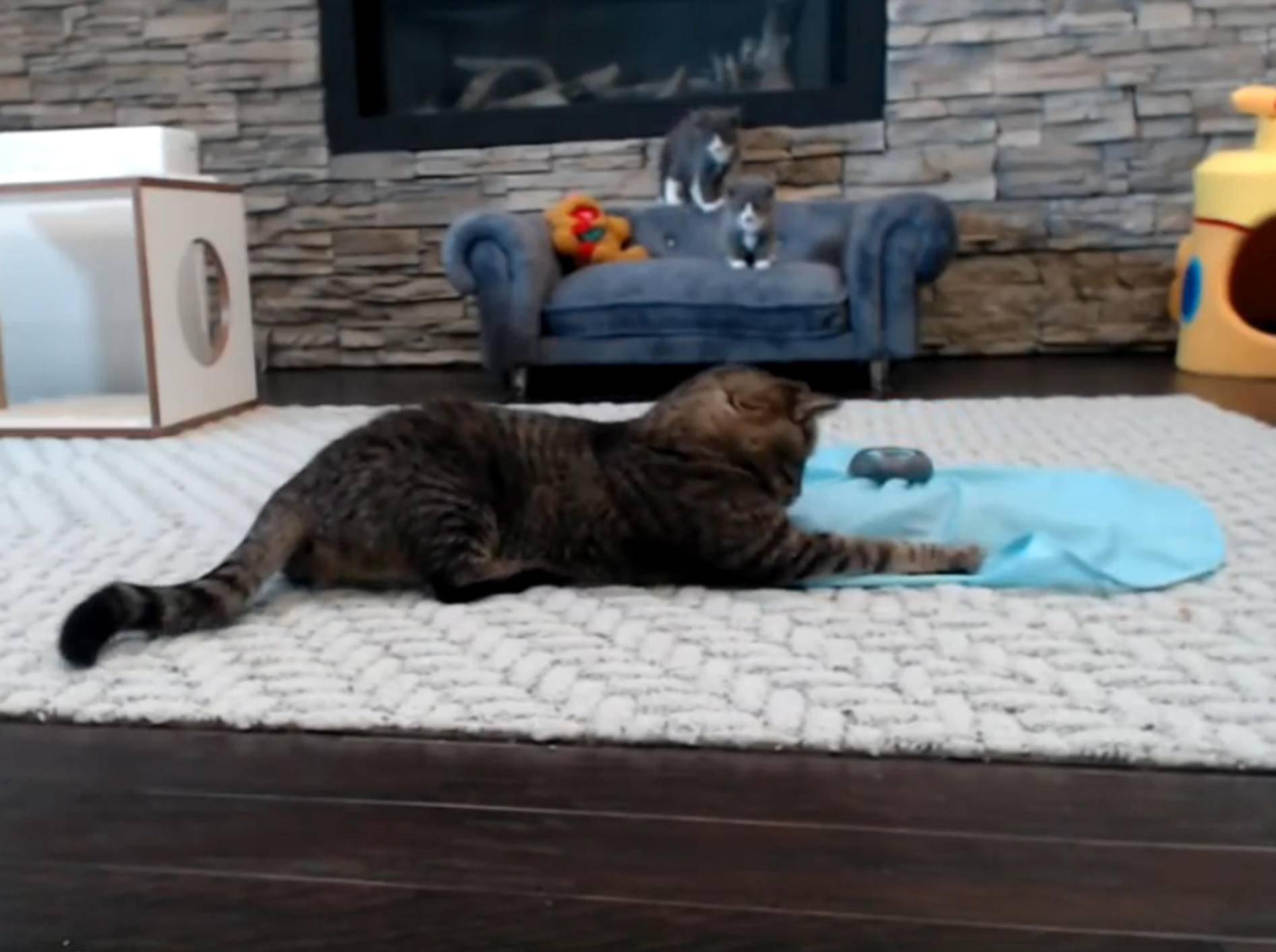 Katzenopa Mason will Kätzchen Jagen beibringen – YouTube/TinyKittens HQ