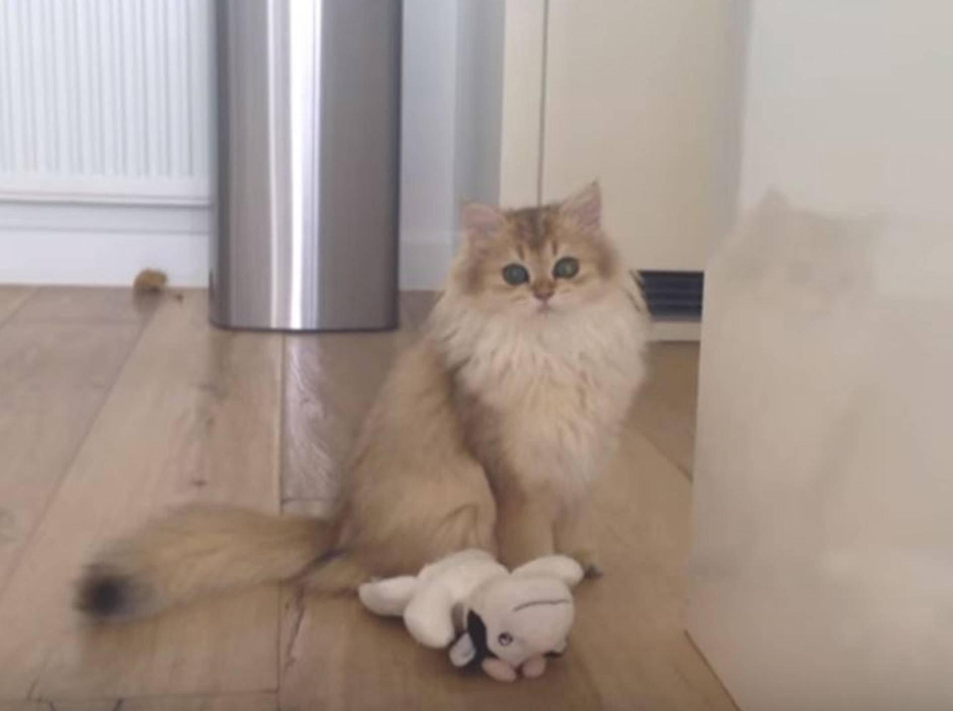 Katze Smoothie liebte es schon als Teenager auf Entdeckungstour zu gehen - YouTube / smoothiethecat