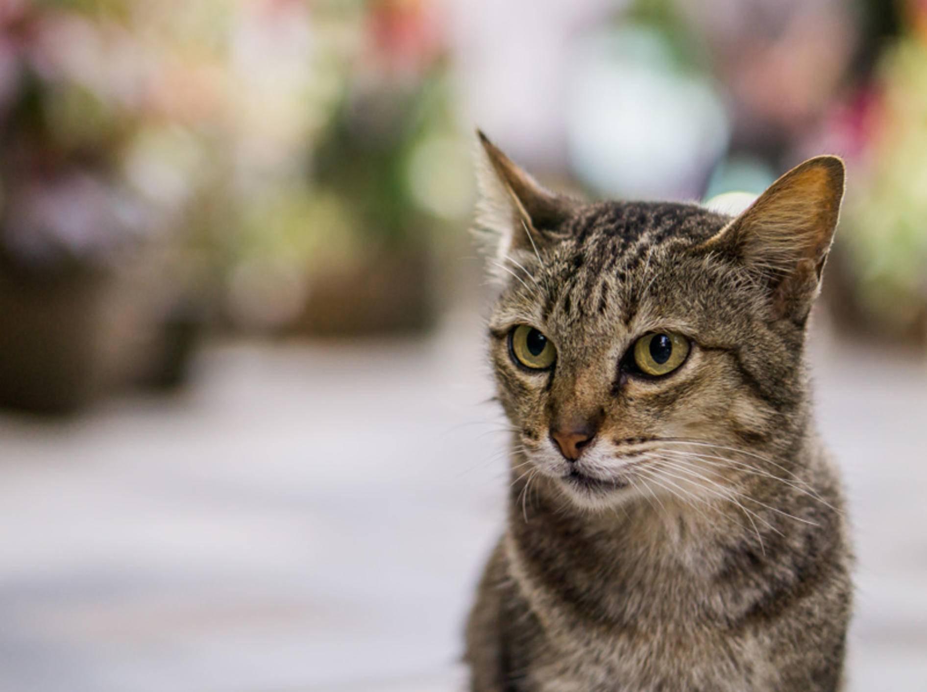 Spondylose kann auch junge Katzen treffen – Bild: Shutterstock / MR.WICHAI THONGTAPE