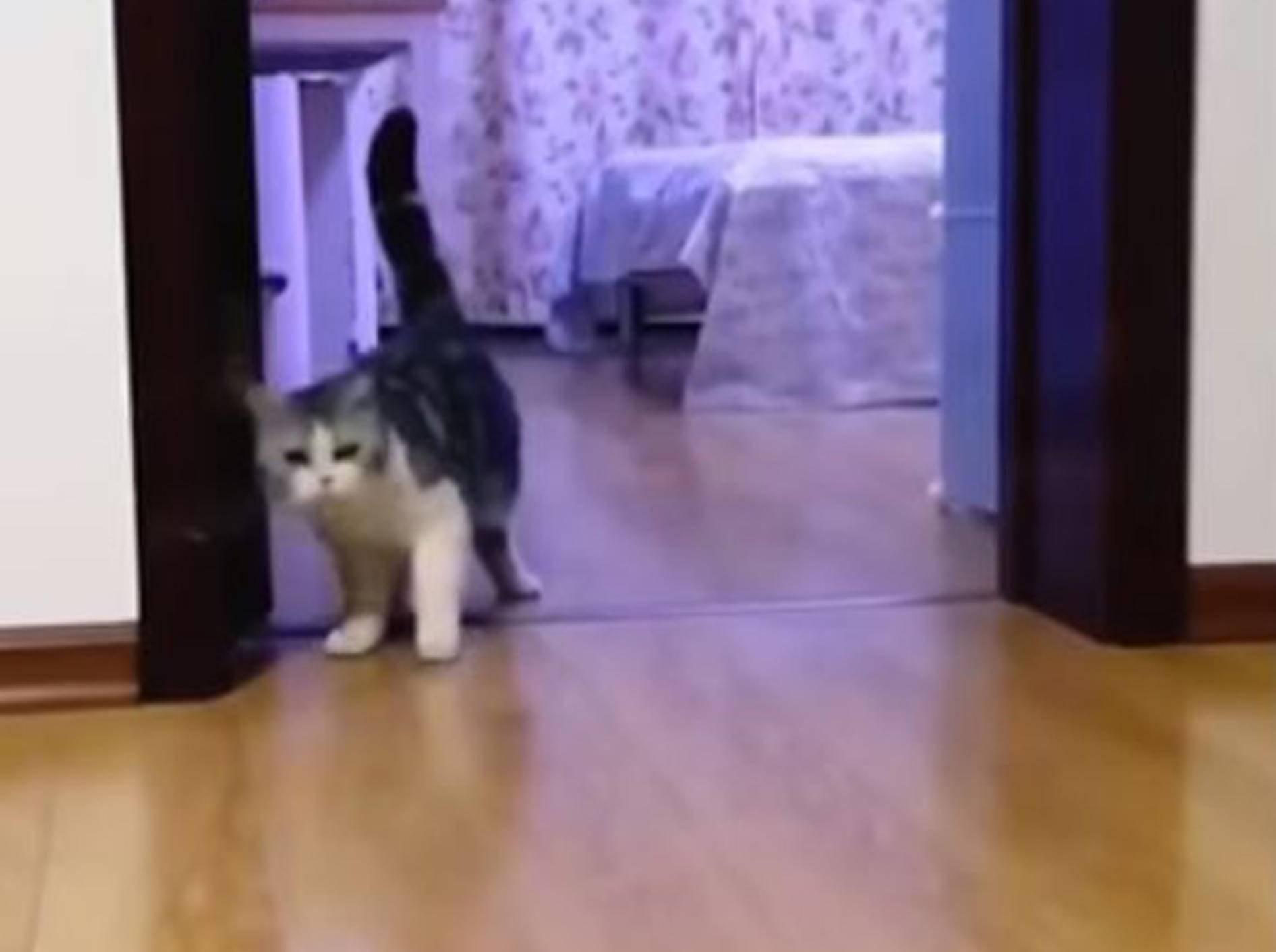 Katze schaut verwirrt - Bild: YouTube / Piyush Basak