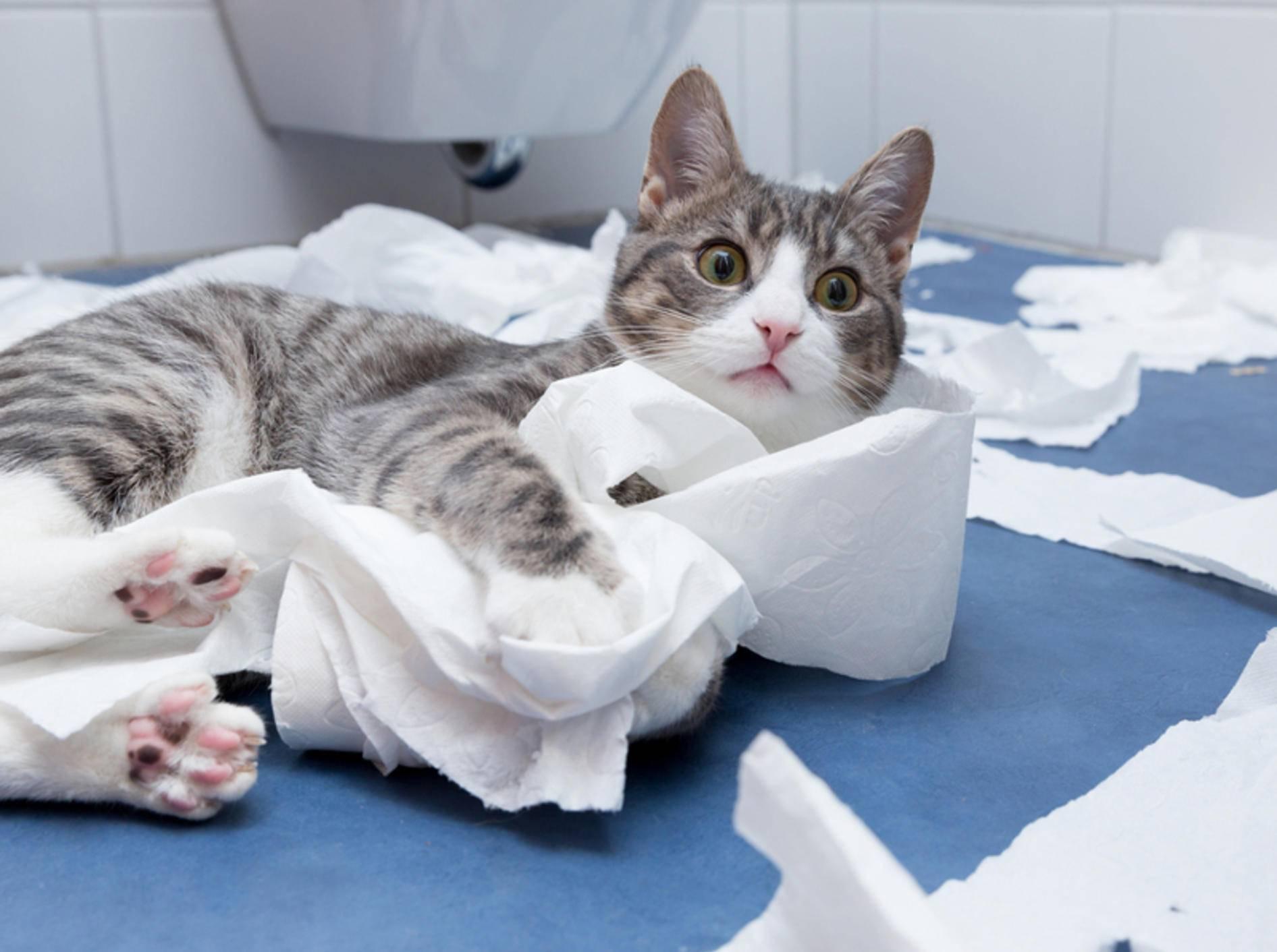 Mit Toilettenpapier zu spielen, bringt auch einfach so viel Spaß! - Bild: Shutterstock/bmf-foto.de