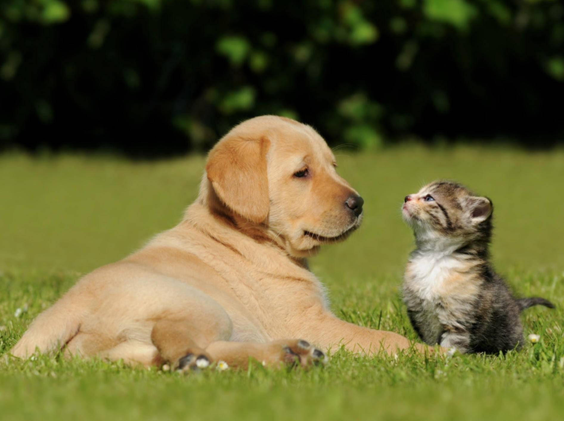 Von wegen Hund und Katze würden sich nicht verstehen. Diese Zwei zeigen Gegenteiliges – Bild: Shutterstock / schubbel