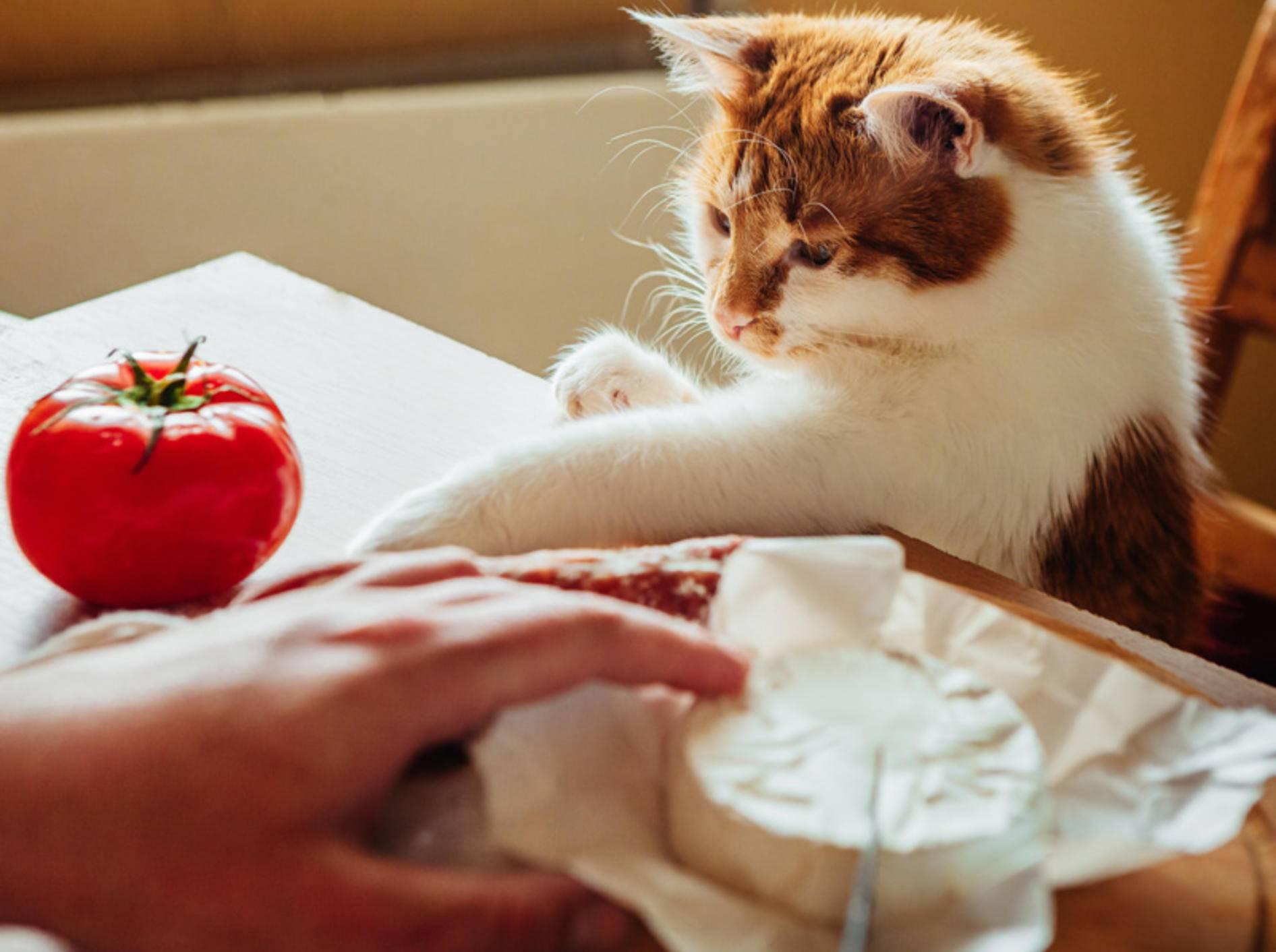 Nur mal gucken! Katzen in der Küche haben immer was zu entdecken — Bild: Shutterstock / Yuliia Balanenko