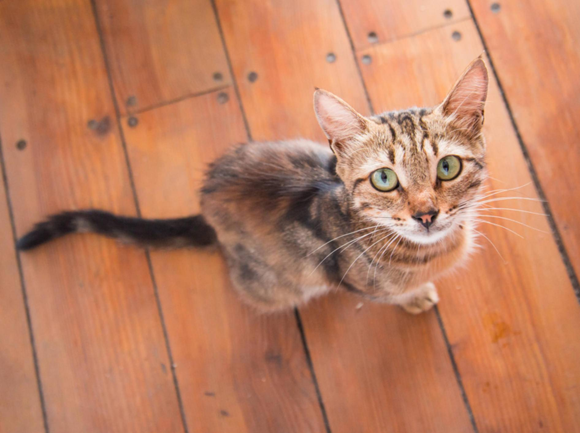 Welche Mangelerscheinungen gibt es bei Katzen? - Bild: Shutterstock / Evgeny Savchenko