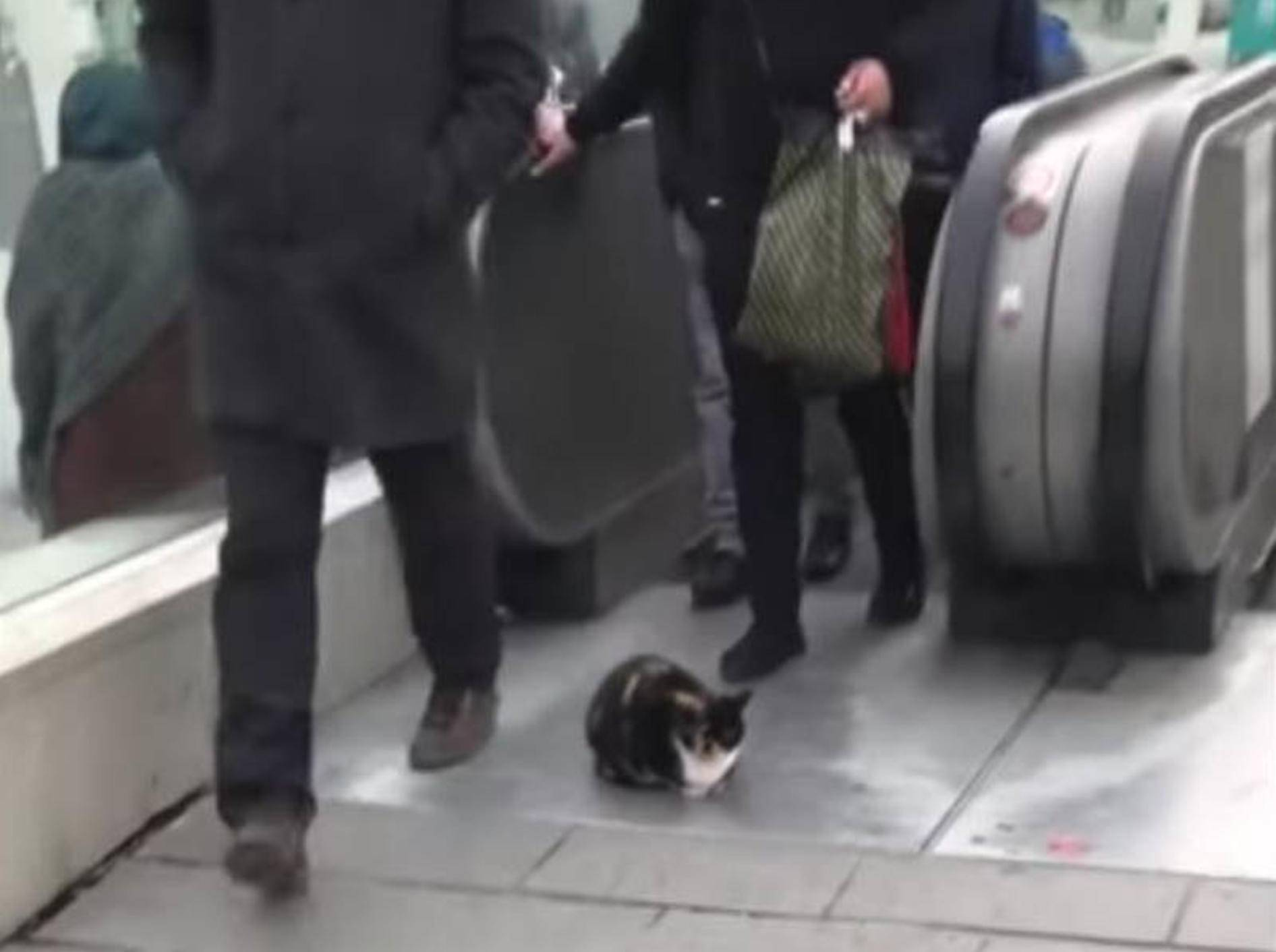 Diese Katze hält ein Nickerchen vor einer Rolltreppe. Die Passanten scheinen sie dabei nicht zu stören - Bild: YouTube/Docu Watch