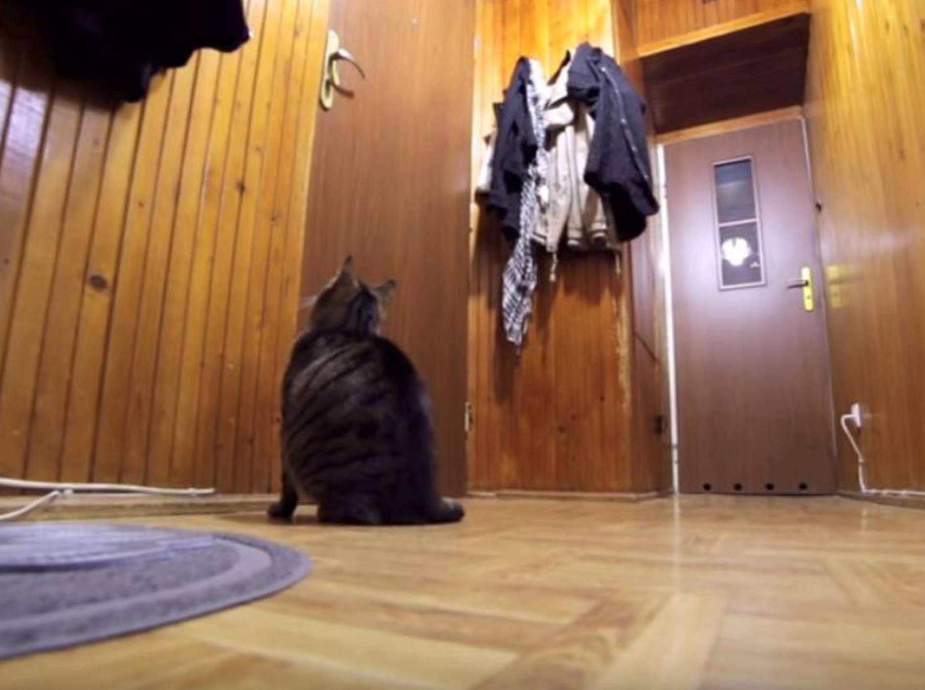 Diese Katze kann es kaum erwarten, dass Herrchen wieder nach Hause kommt - Bild: YouTube / Krzysztof Smeijlis