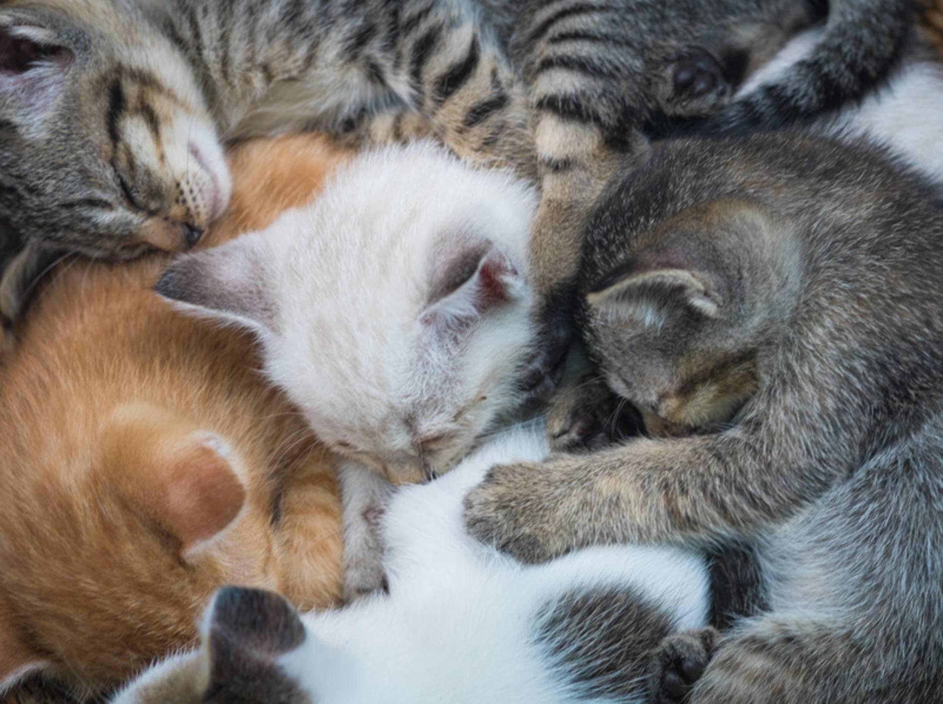 Das Einzige, was süßer ist als ein schlafendes Katzenbaby: Viele schlafende Katzenbabys! — Bild: Shutterstock / Good Shop Background