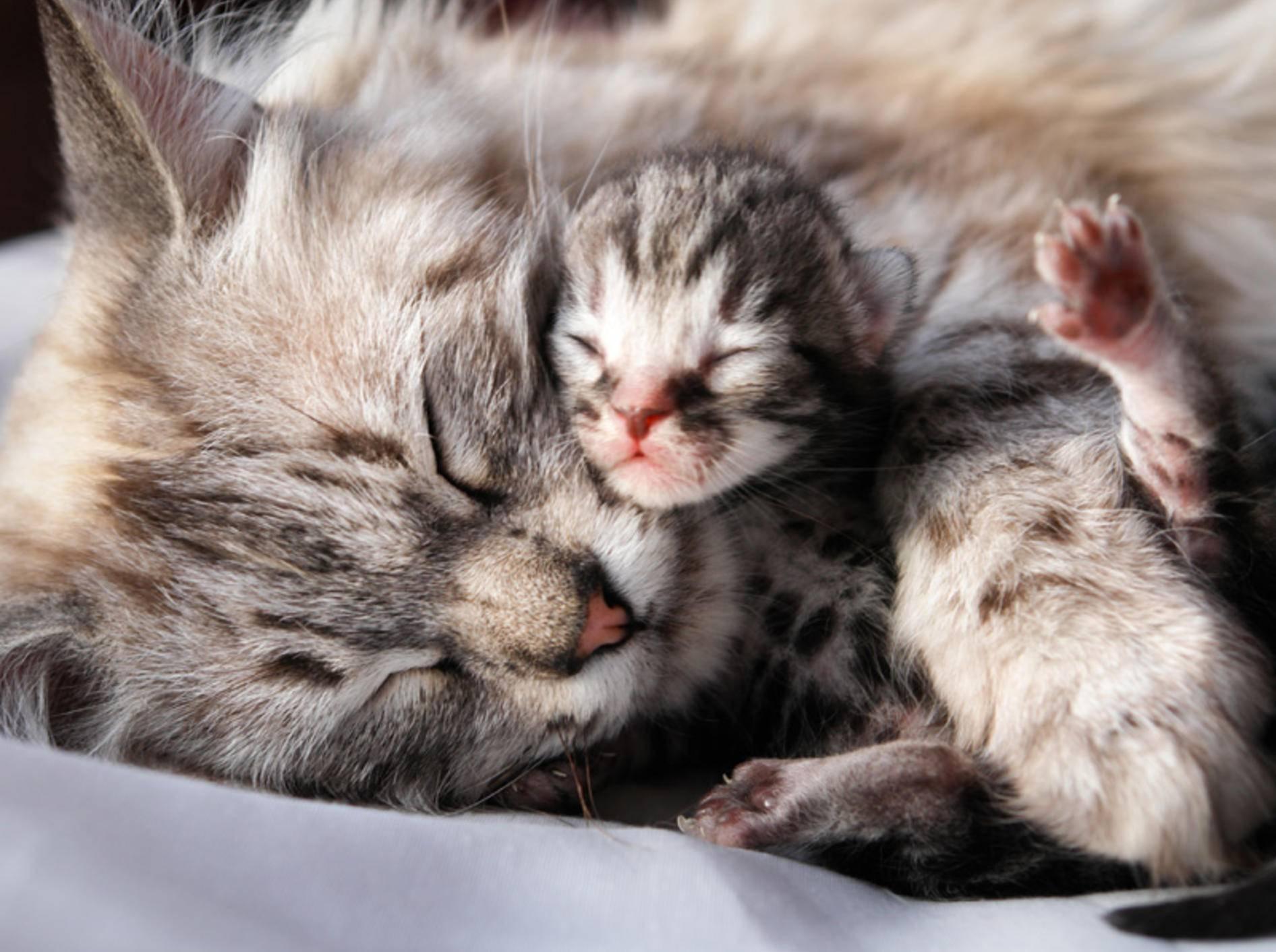 Kuscheln mit Mama: Dieses Katzenbaby ist ganz neu auf der Welt — Bild: Shutterstock / Orhan Cam