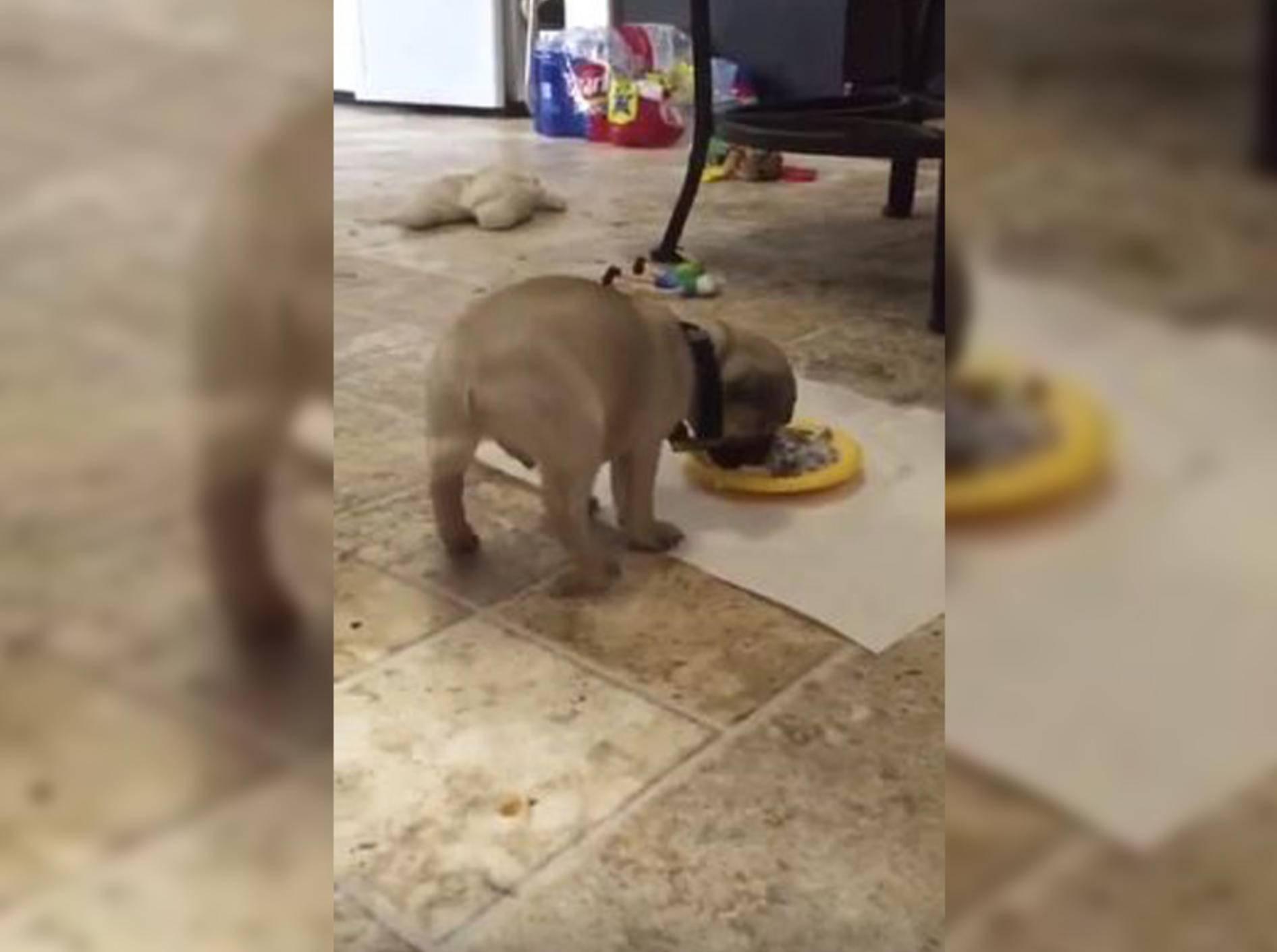 Dieser Hund hebt beim Fressen ab, im wahrsten Sinne des Wortes – Bild: YouTube / LautLachenTV