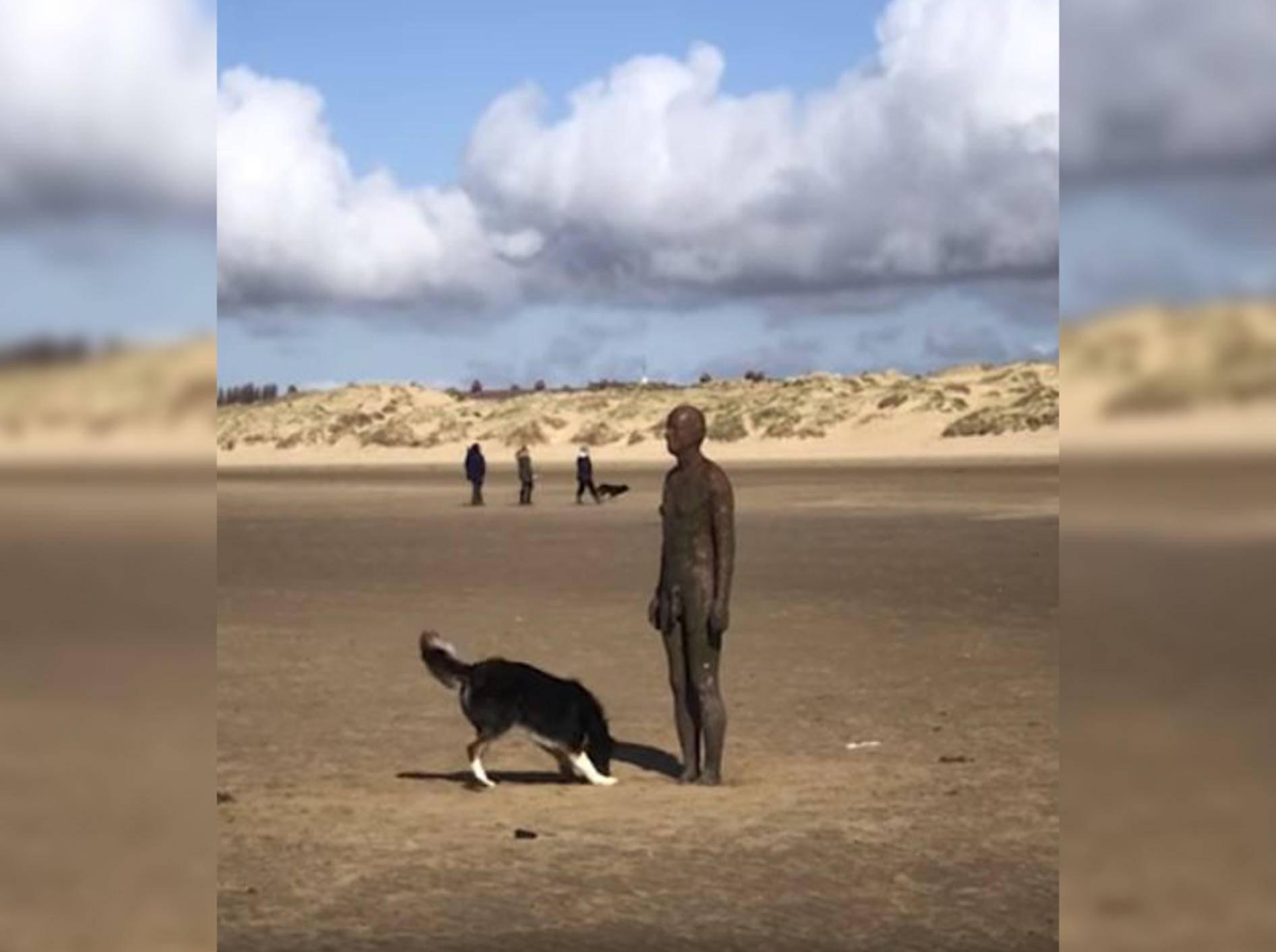 Hund Hurley will mit einer Statue spielen - Bild: YouTube/Caters Clips