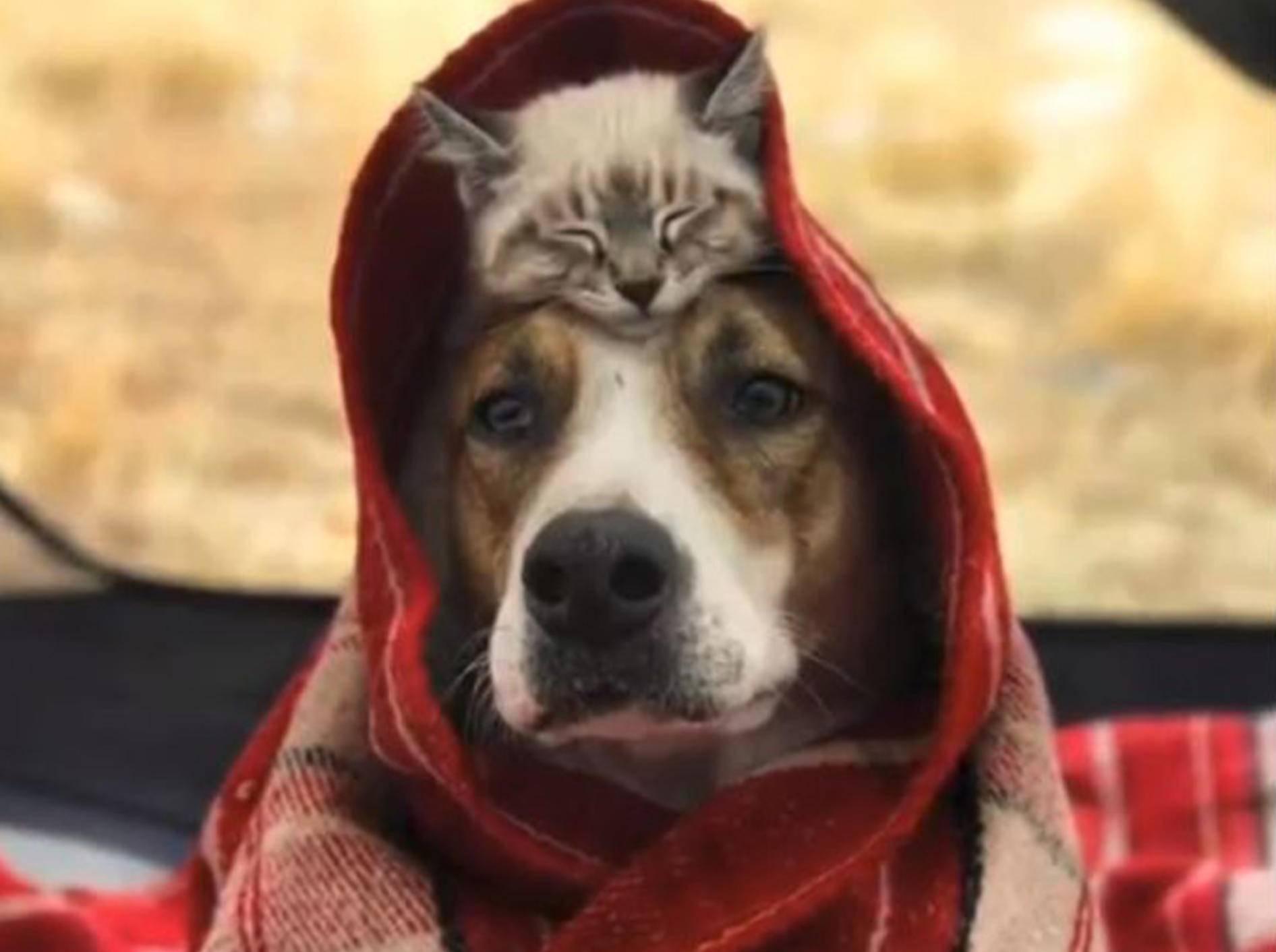 Hund Henry und Katze Baloo sind ein Herz und eine Seele - Bild: YouTube / Multiple Media