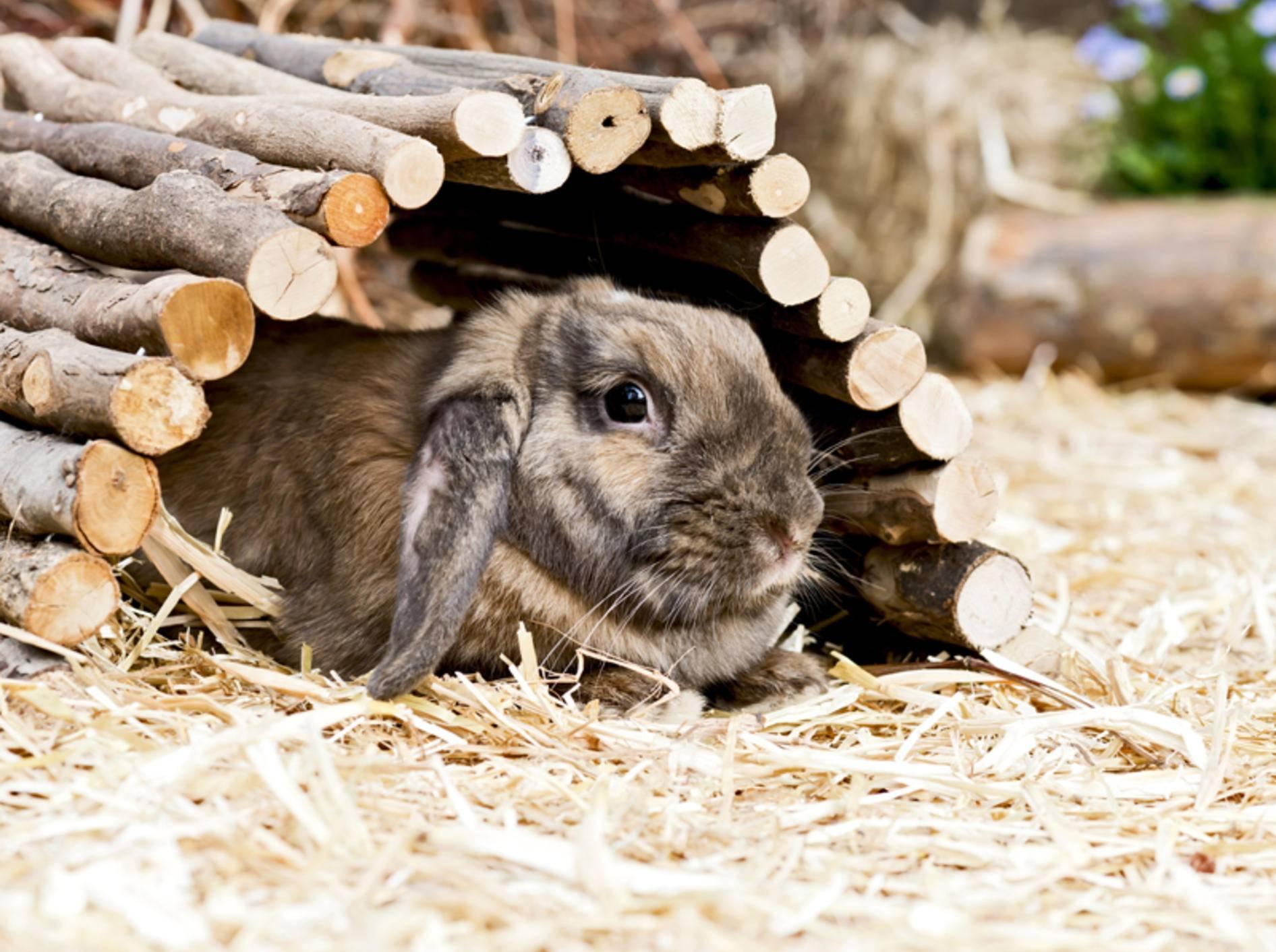 Verstopfungen können lebensbedrohlich für Kaninchen werden – Bild: Shutterstock / Claudia Paulussen