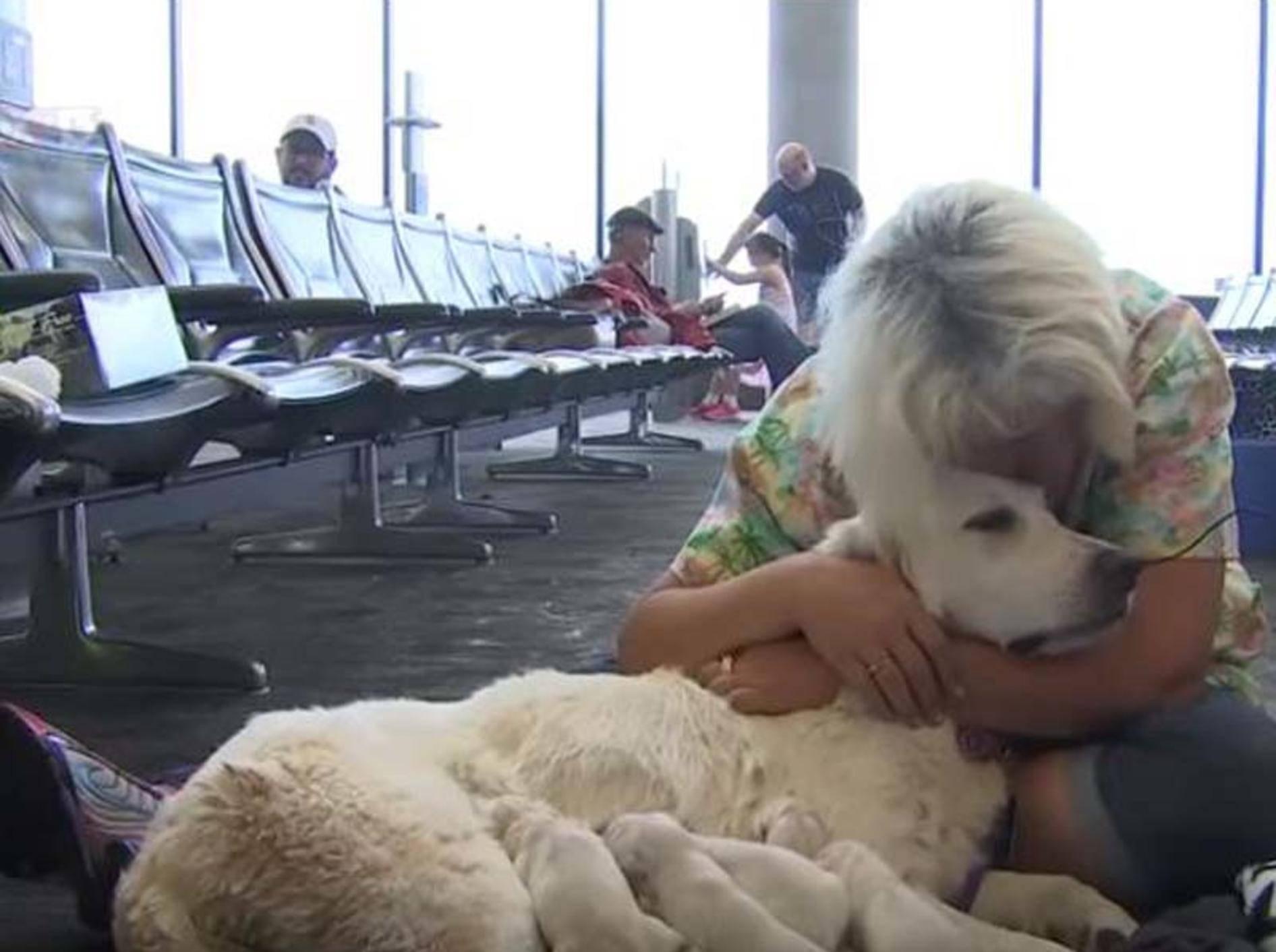 Hündin Ellie hat ihren Nachwuchs am Flughafen zur Welt gebracht - Bild: YouTube / FOX 13 News - Tampa Bay