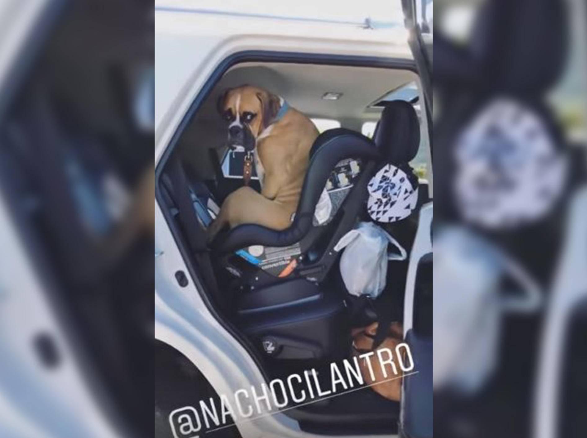 Hund Nacho will einfach nicht aussteigen - Bild: YouTube / Jillian Harris