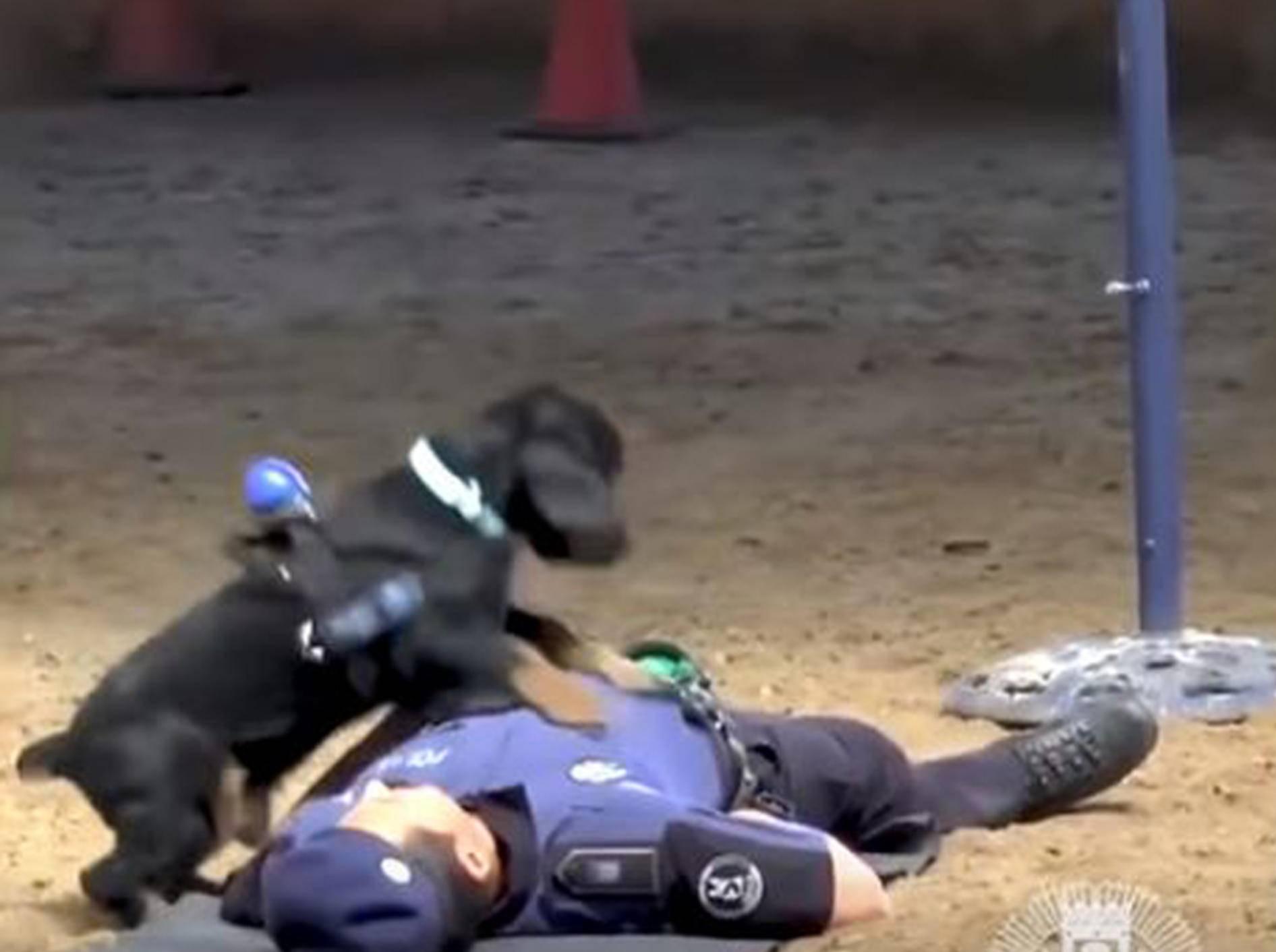 Polizeihund Poncho in Aktion - Bild: YouTube / WELT