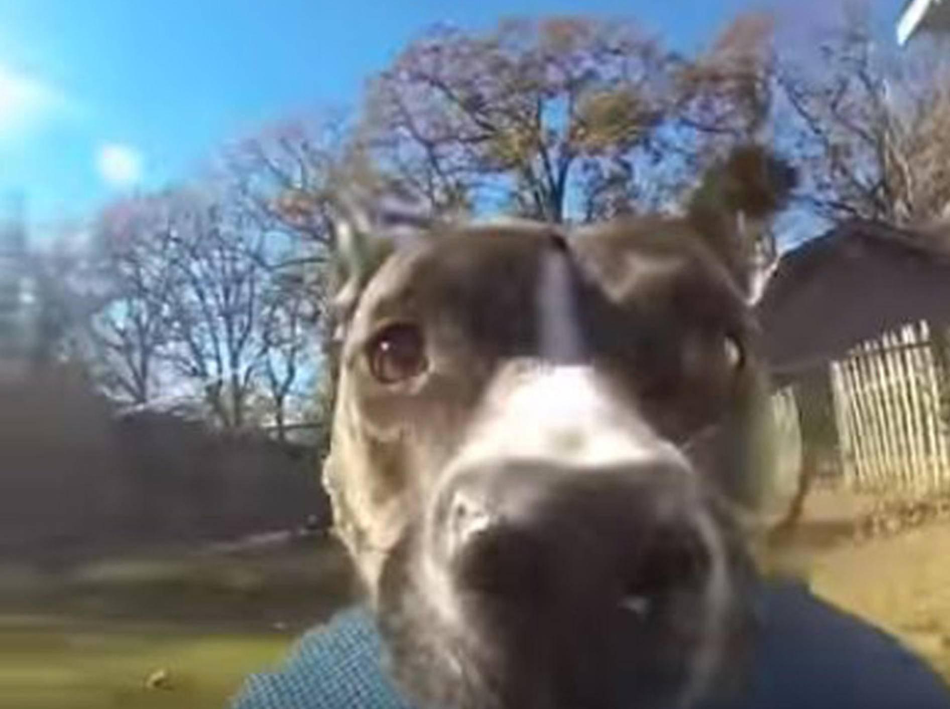 Hundedame Bonnie hat sich die GoPro ihres Besitzers gemopst - Bild: YouTube / RM Videos