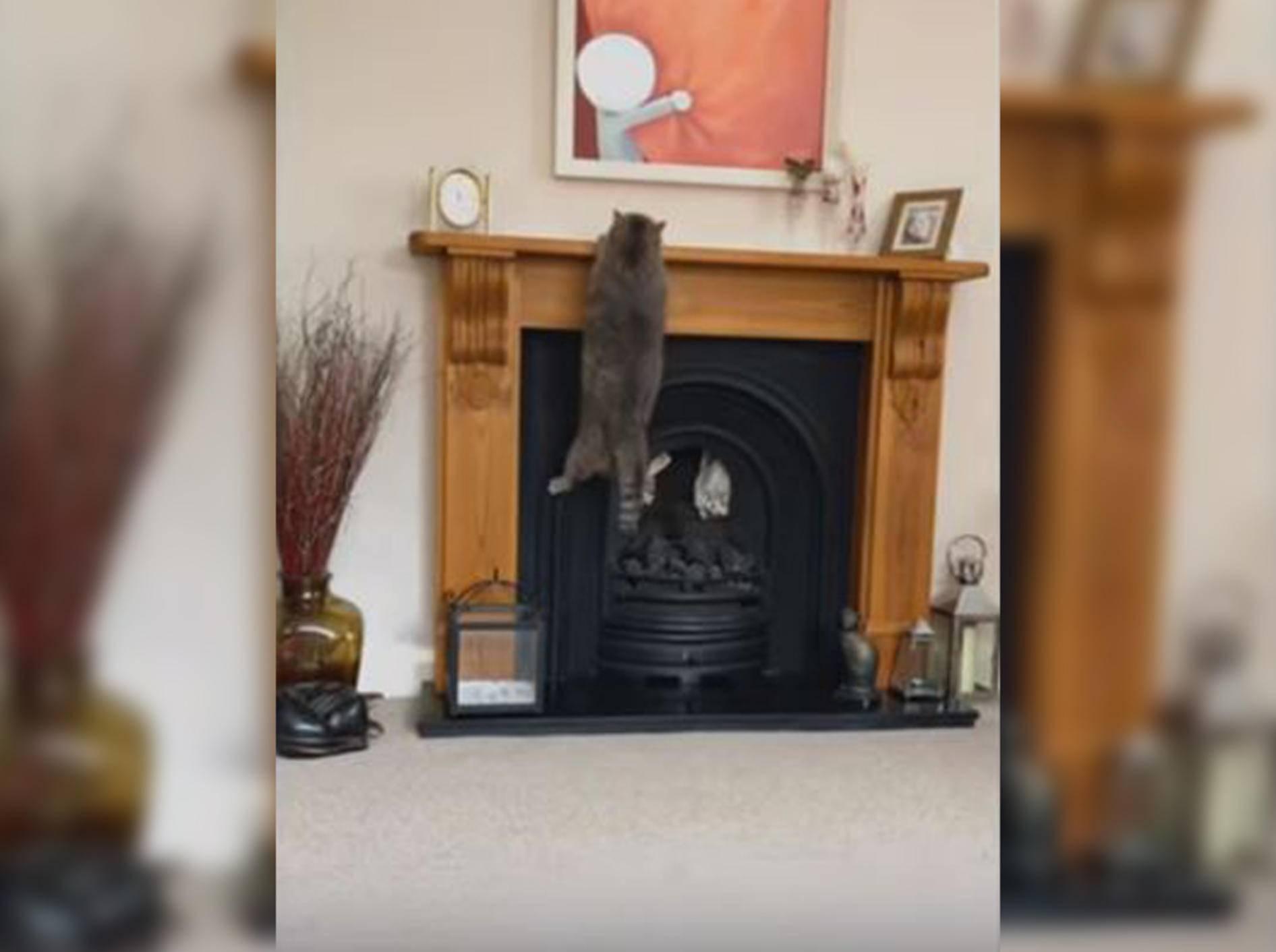 Diese Katze versucht vergeblich, auf den Kaminsims zu klettern - Bild: YouTube / DailyPicksandFlicks