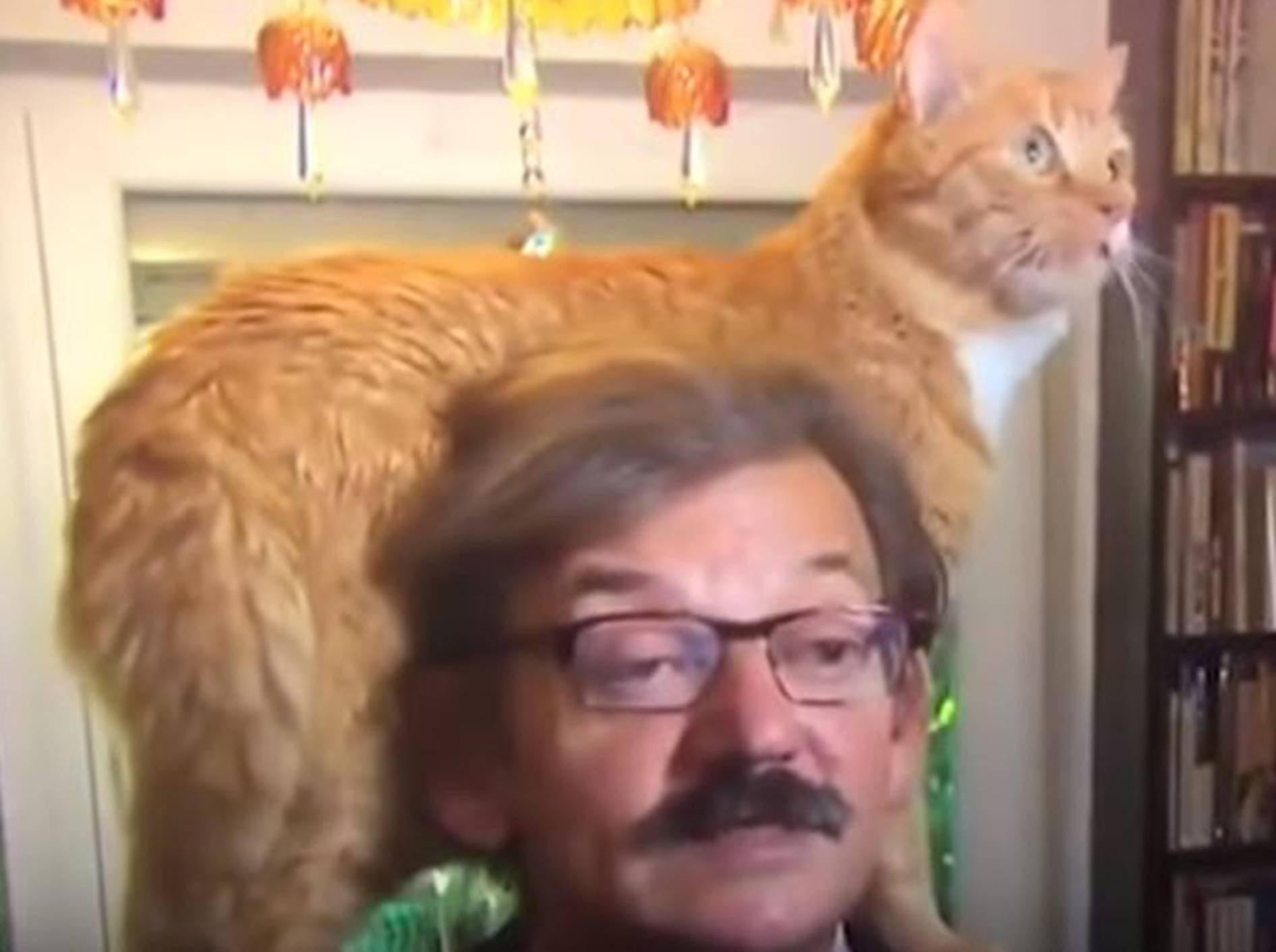 Von seiner Katze ließ sich dieser Interviewte nicht beirren - Bild: YouTube / 24 TV PROD