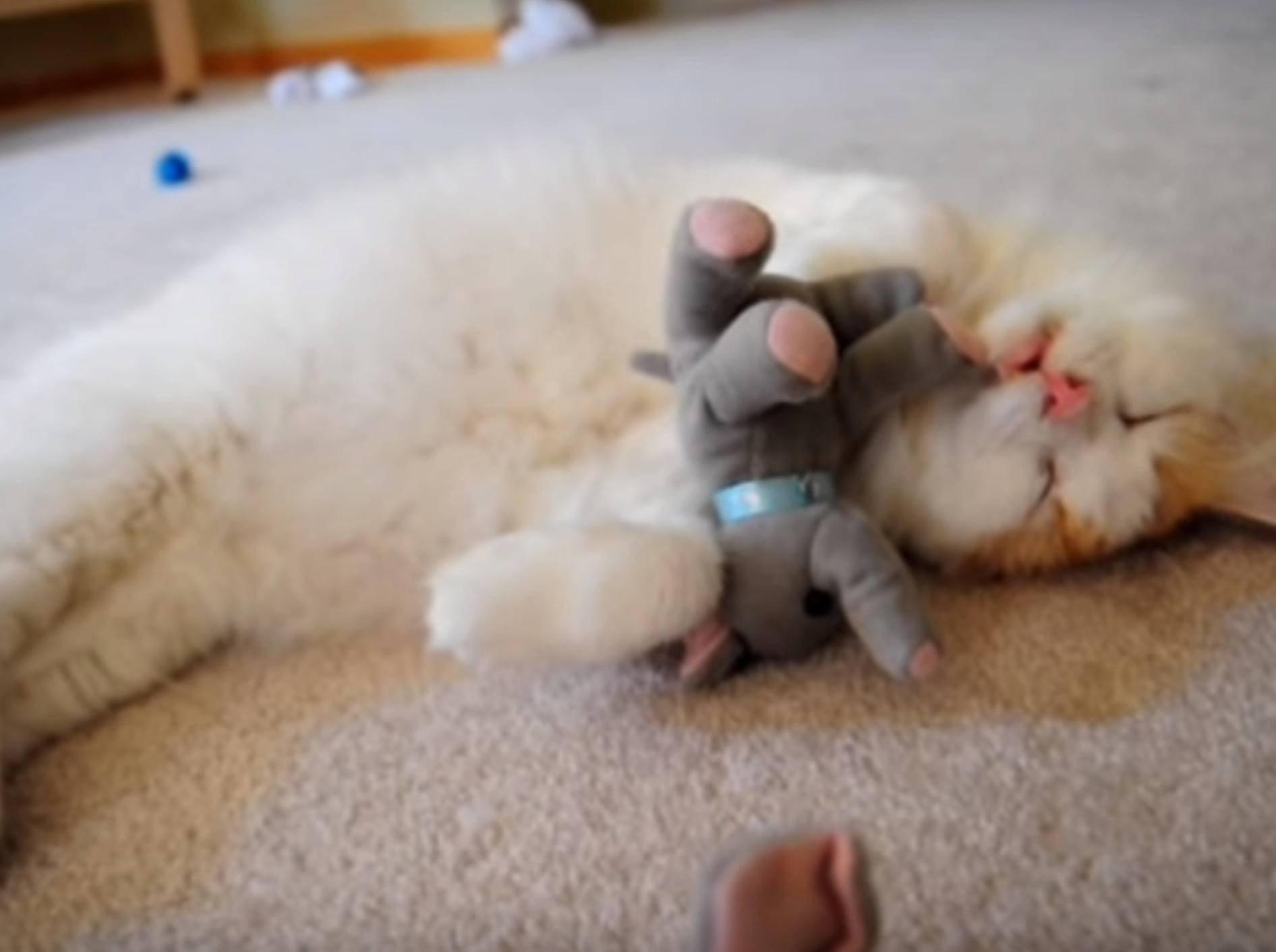 Süß! Kater Jackie liebt seine Stoffelefanten - Bild: YouTube / Love Meow