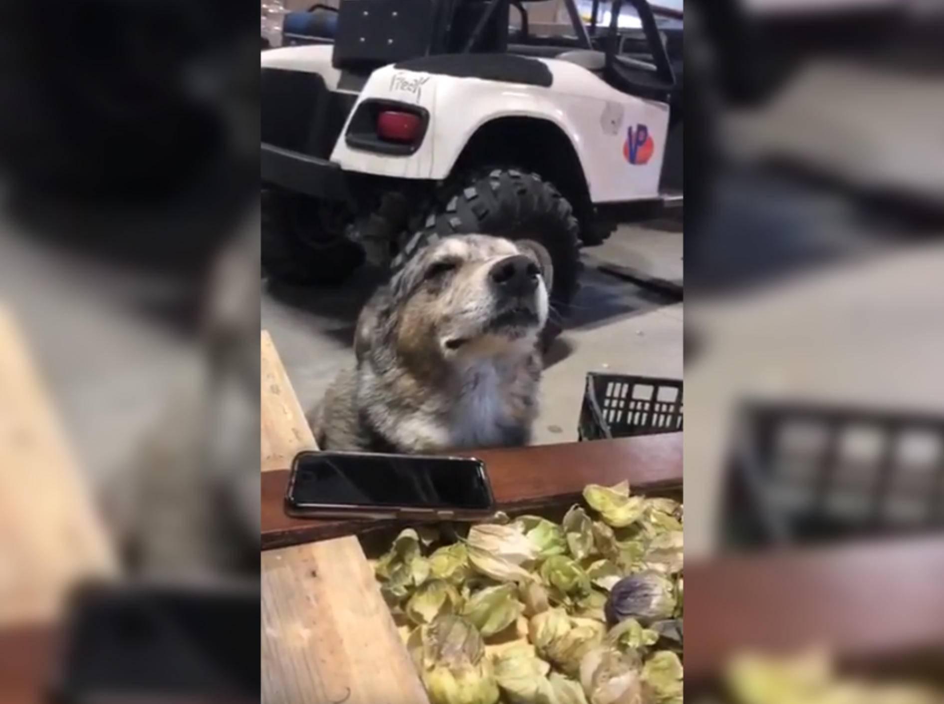 Hund Chasimo scheint die Musik zu fühlen - Bild: YouTube / Twitter Clips