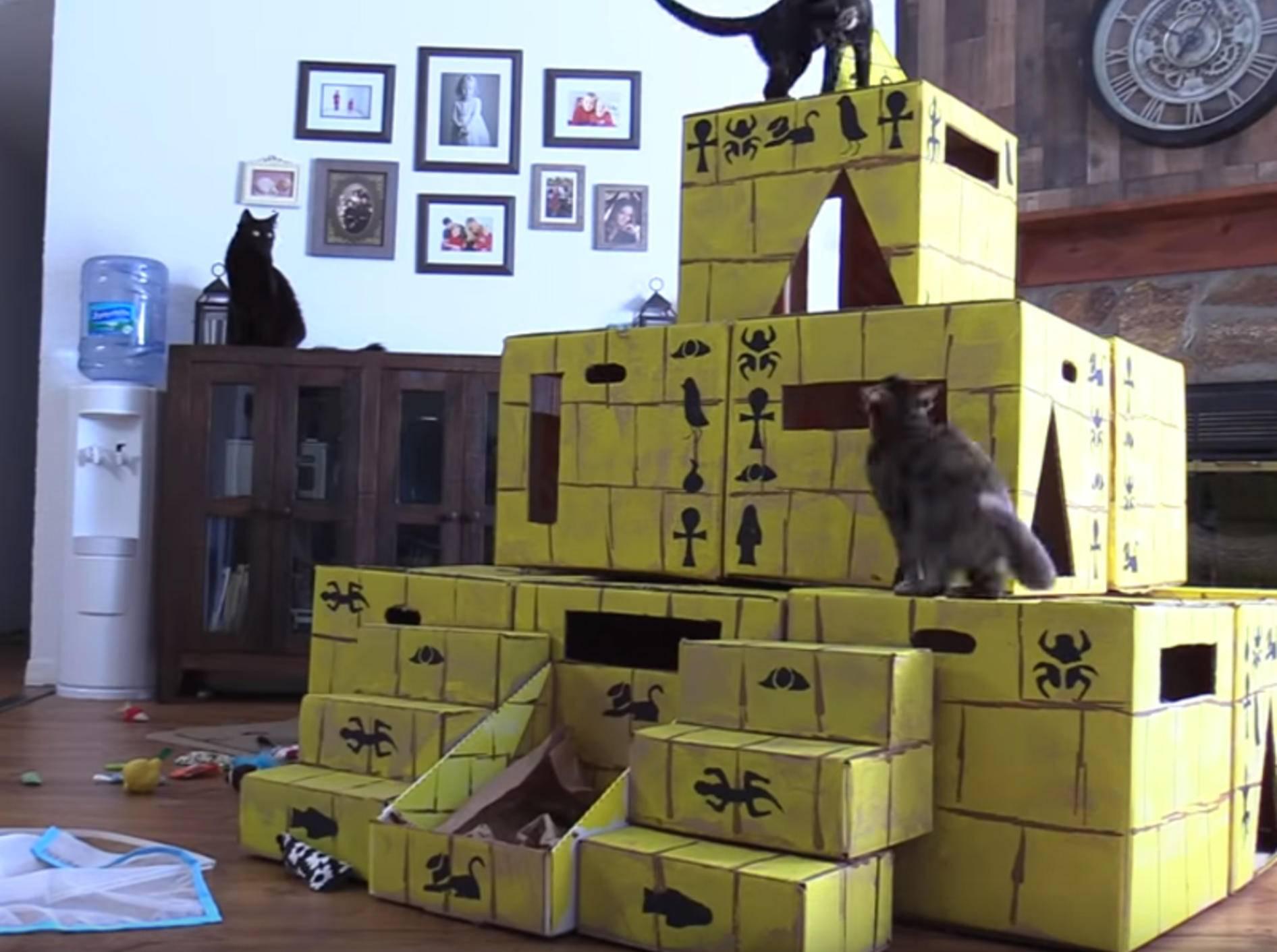 Nicht nur Cole und Marmelade, sondern auch Zig Zag und Jugg sind hellauf begeistert von dieser Karton-Pyramide - Bild: YouTube / Cole and Marmelade