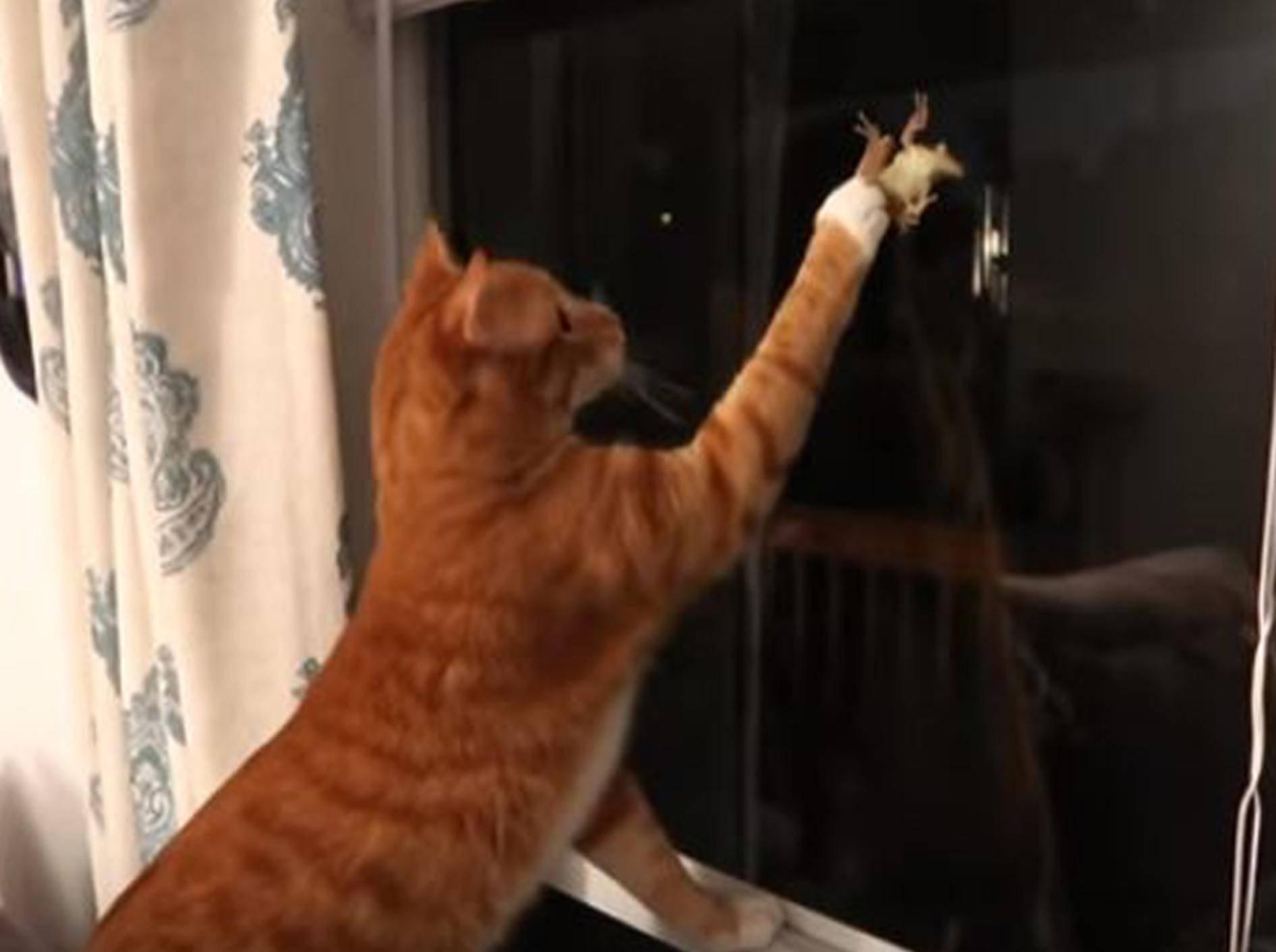 Marmelade hat es auf einen Frosch auf der Fensterscheibe abgesehen - Bild: YouTube / Cole and Marmelade