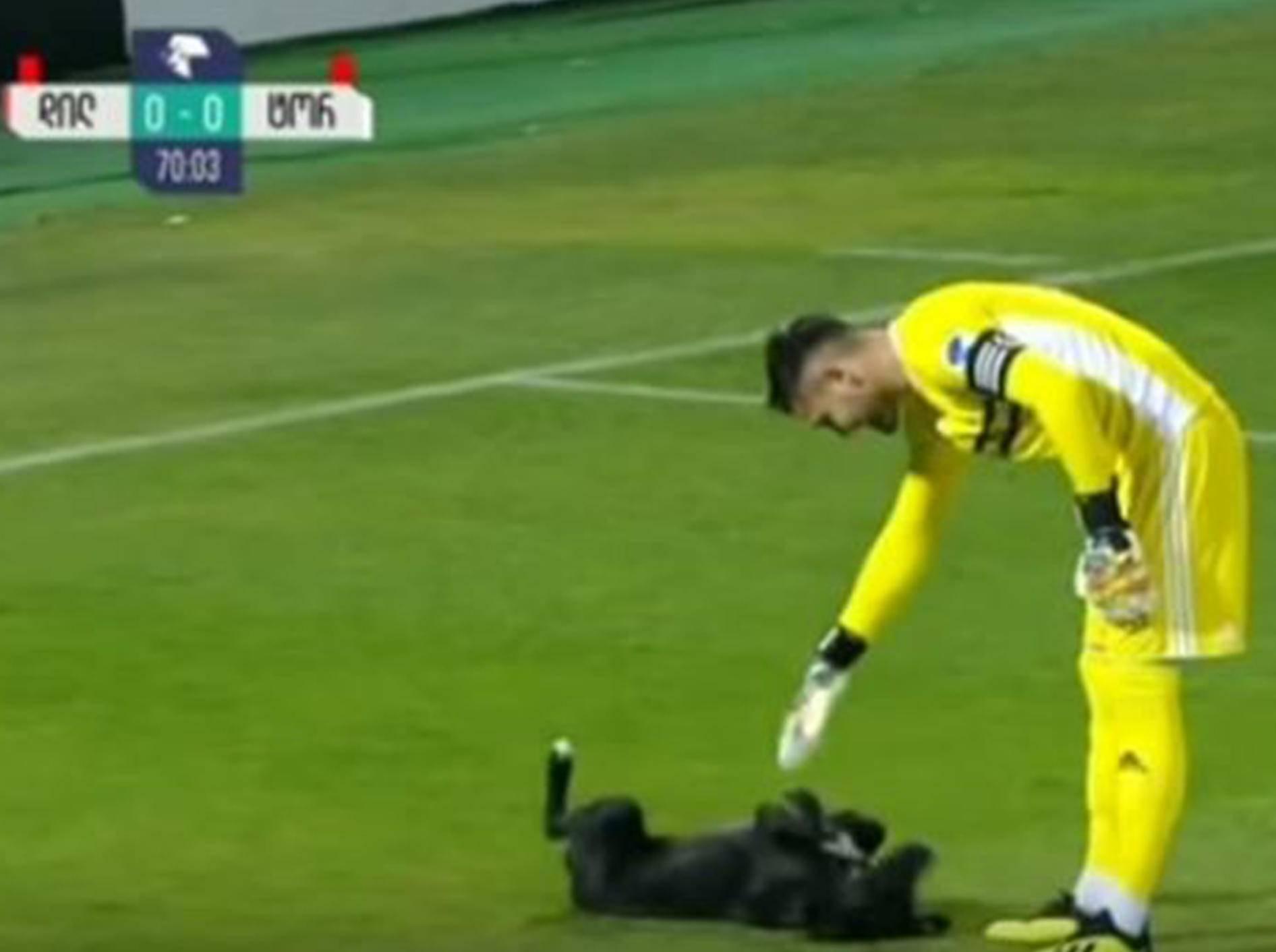 Ein Hund sorgte bei einem Fußballspiel in Georgien für eine Extrapause - Bild: YouTube / ODN