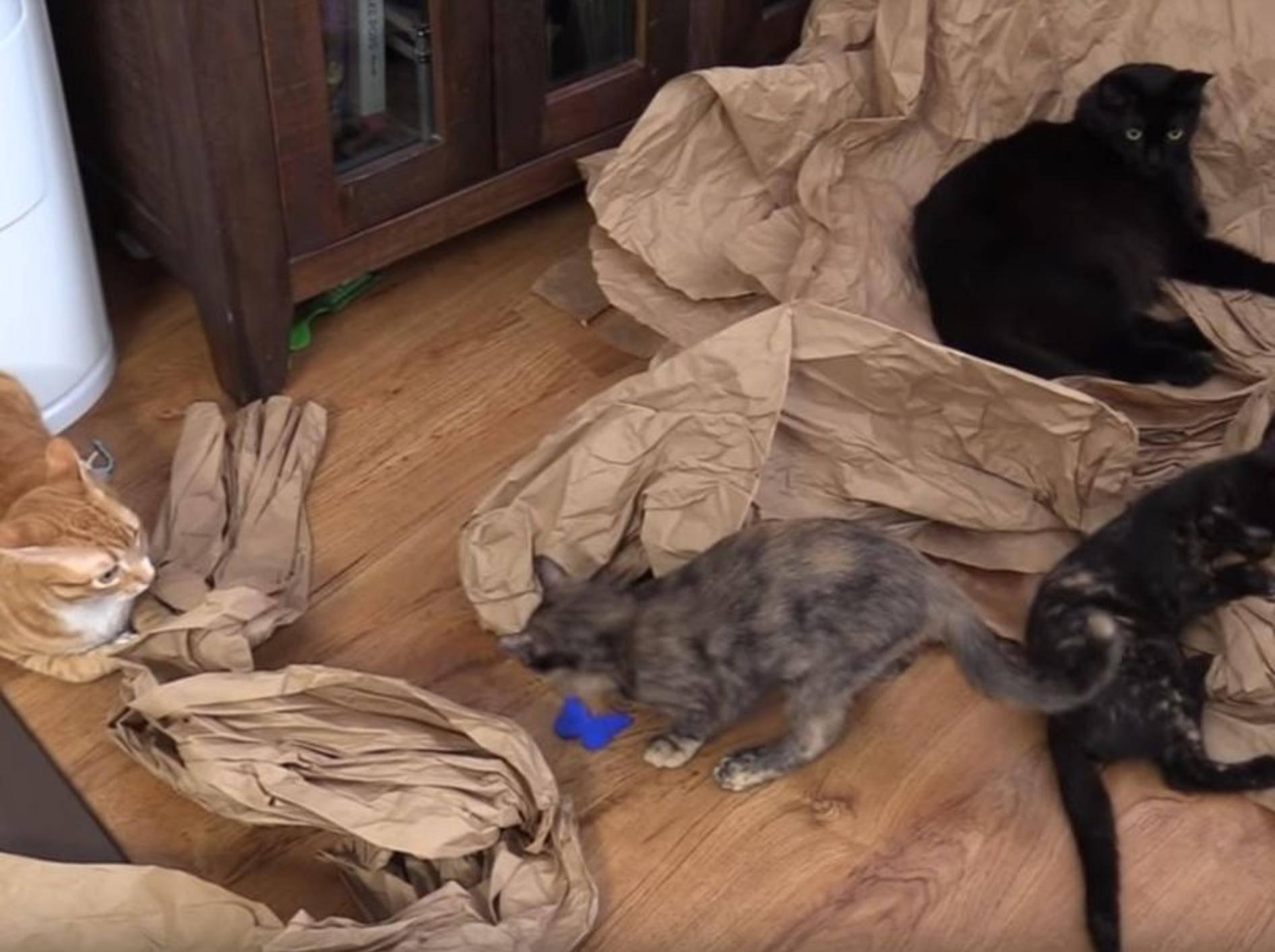 Cole & Marmalade treffen auf ihre Katzenschwestern Jugg & Zig Zag – YouTube / Cole and Marmalade