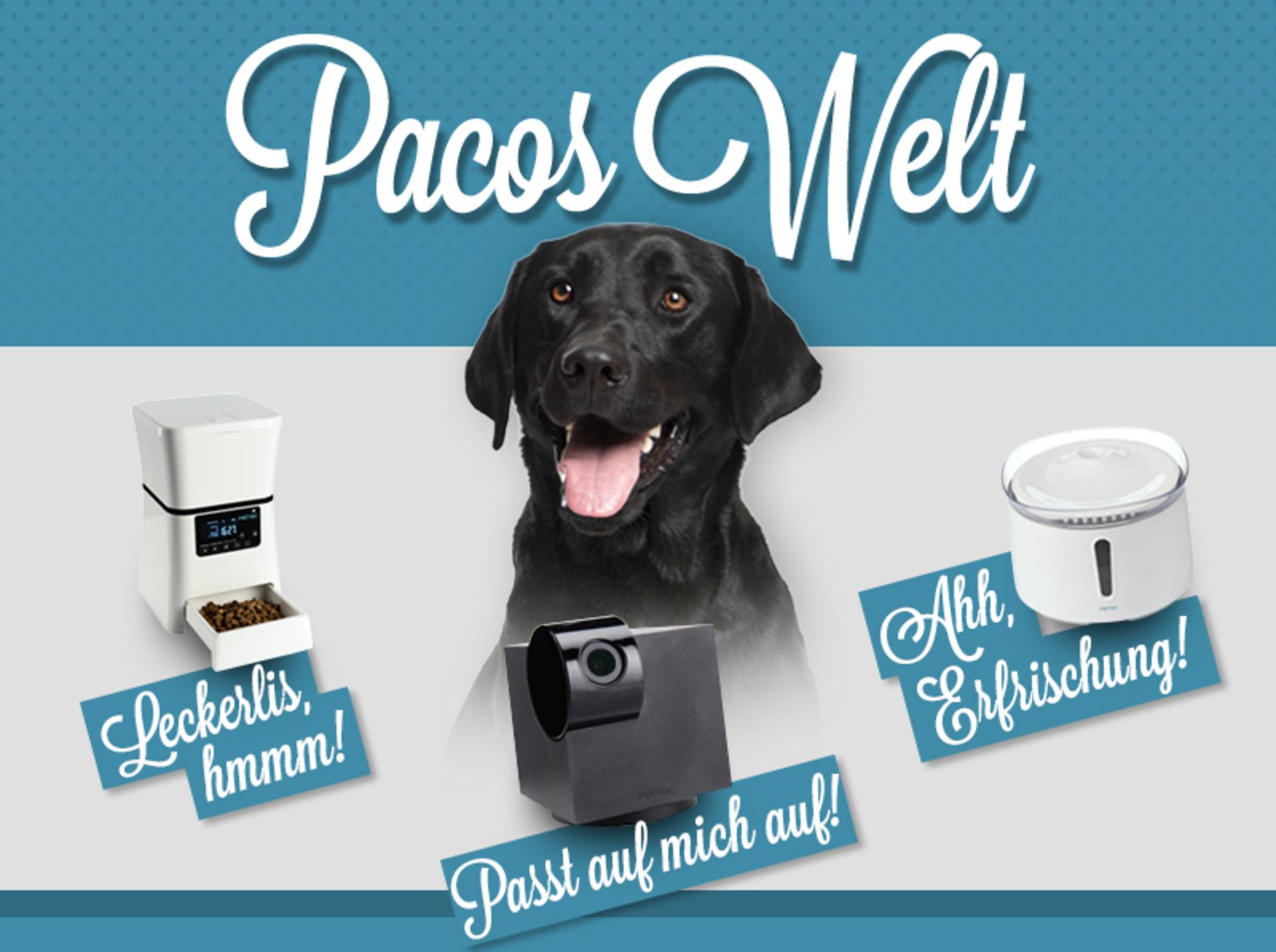 Pacos Welt: Ein fast perfekter Tag - oder wie Frauchen mir auf die Schliche kam