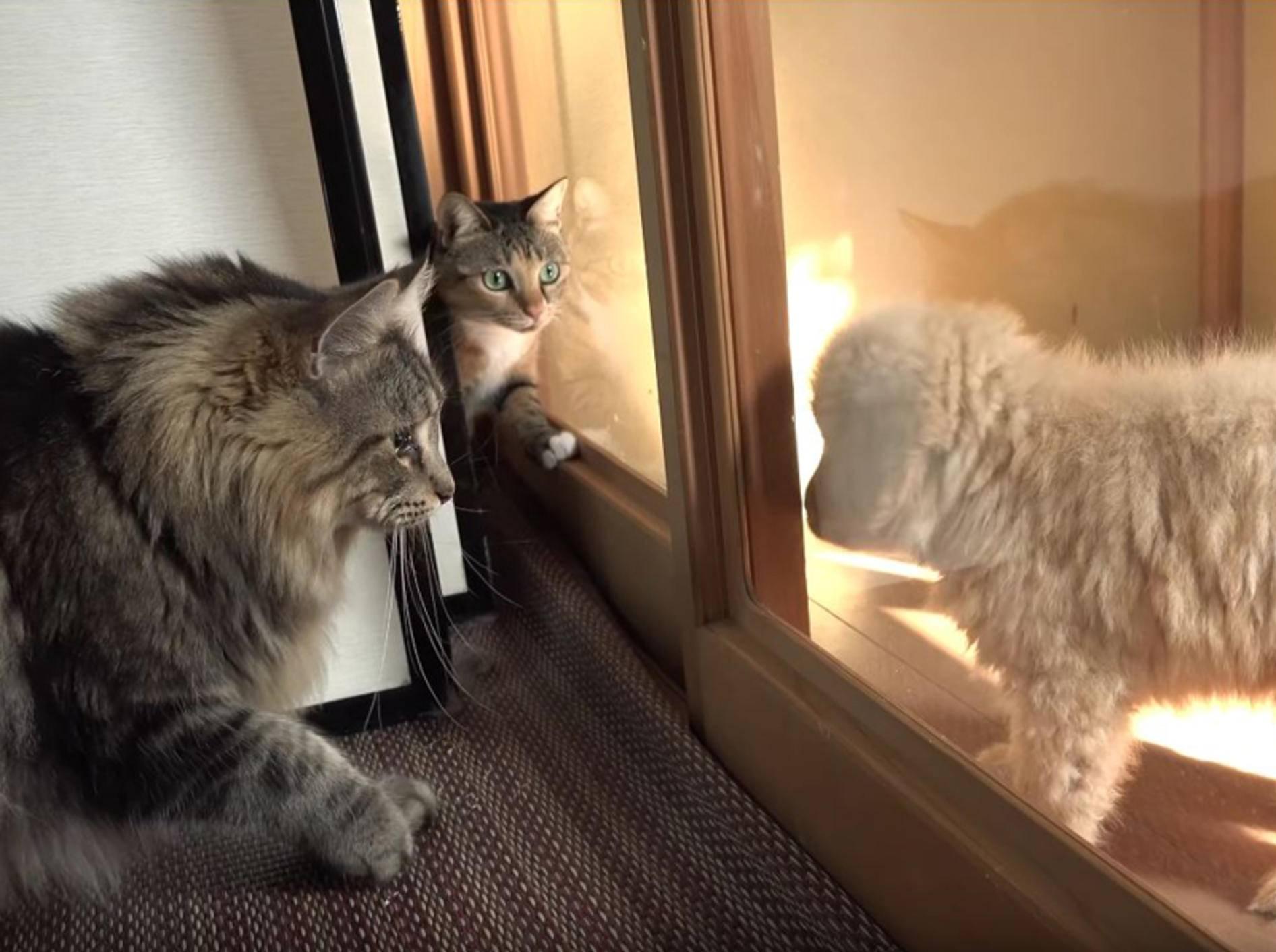 Japanische Katzen-WG trifft auf flauschigen Unbekannten – YouTube / 10 Cats.+
