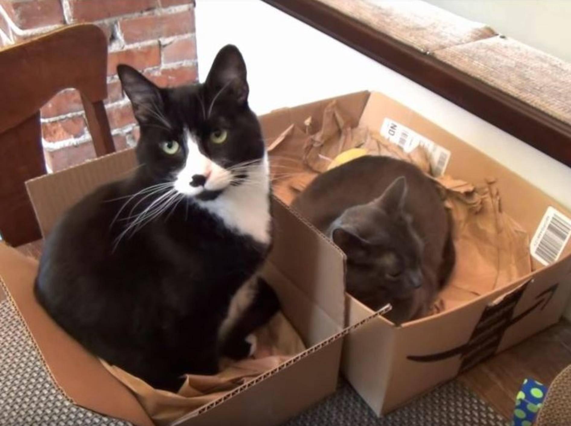 Katzen und Kartons: Eine Liebesgeschichte – YouTube / The Kits Cats