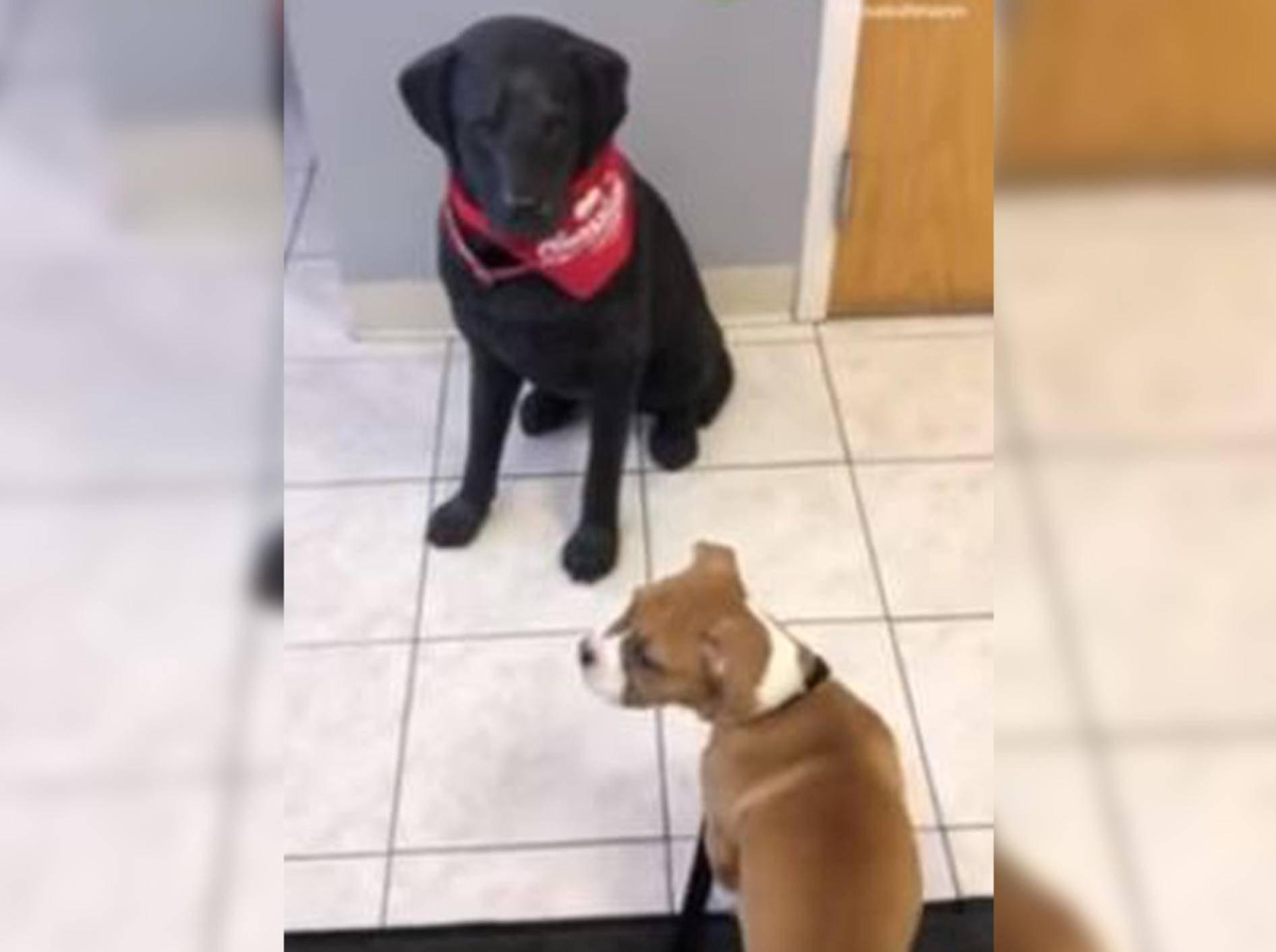 Dieser kleine Hund ist ganz schön verdutzt, weil sein Gegenüber einfach nicht mitspielt - Bild: YouTube / Rumble Viral