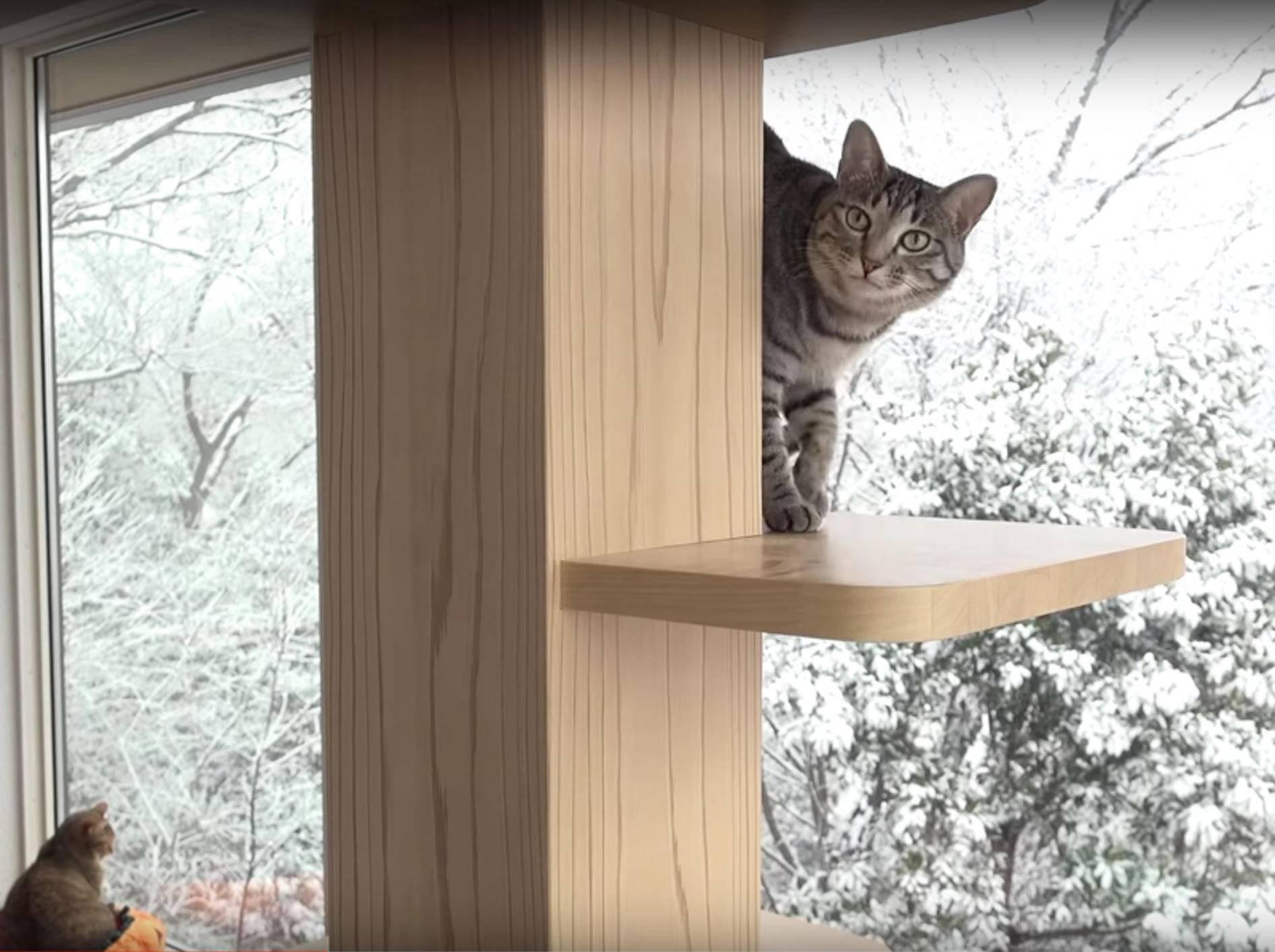 Schöne Aussichten für japanische Katzen-WG – YouTube / 10 Cats.+