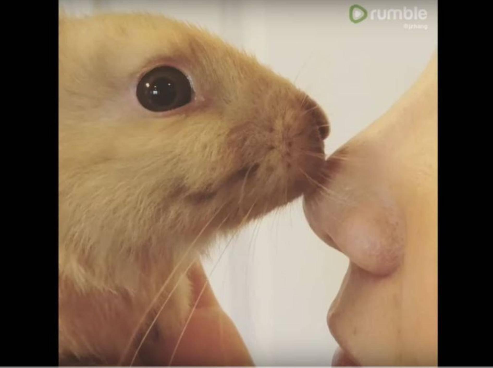 Zuckersüßes Kaninchenbaby gibt Nasenküsschen – YouTube / Rumble Viral