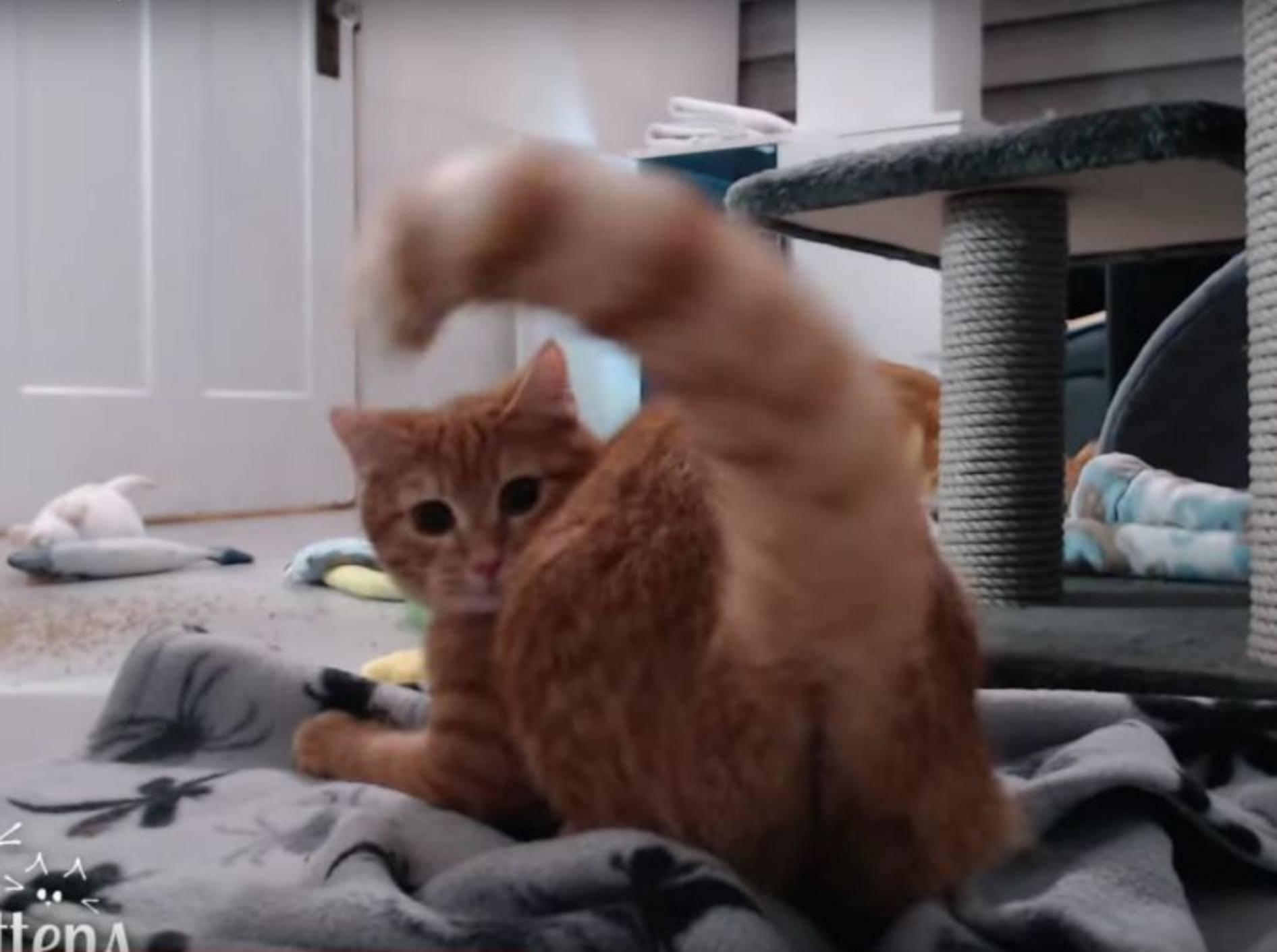 Katze Maddy jagt ihren eigenen Puschelschwanz – YouTube / TinyKittens HQ