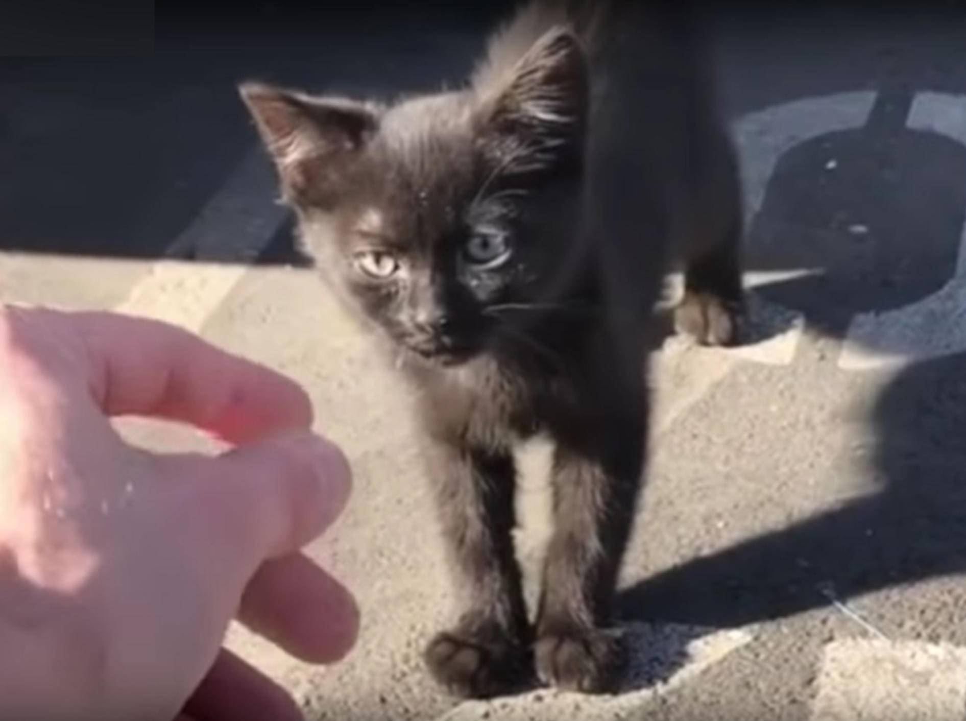 Mann freundet sich mit Streunerkätzchen an – YouTube / Love Meow