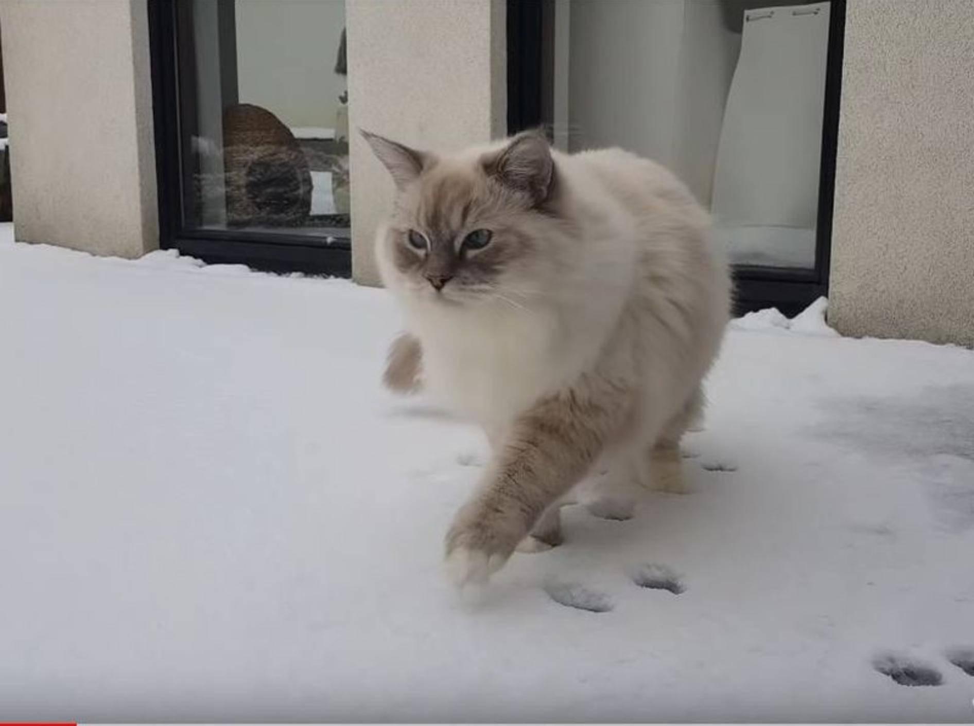 Ragdoll-Katerchen Toby sieht zum ersten Mal Schnee – YouTube / Xiedubbel