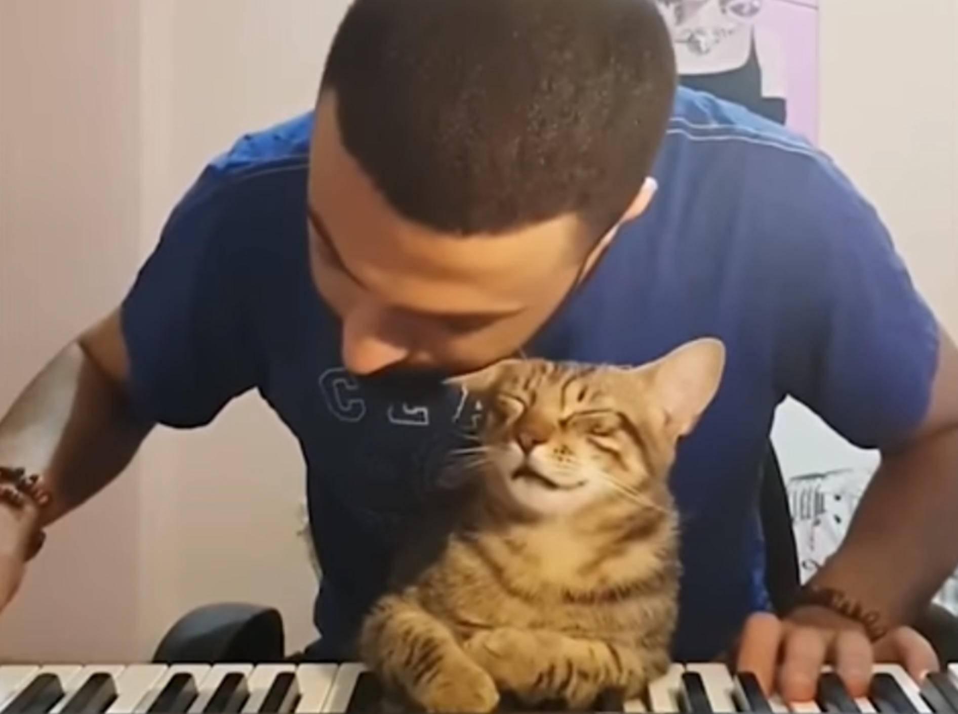 Diese Katze genießt das musikalische Ständchen ihres Besitzers - Bild: YouTube / 9GAG TV