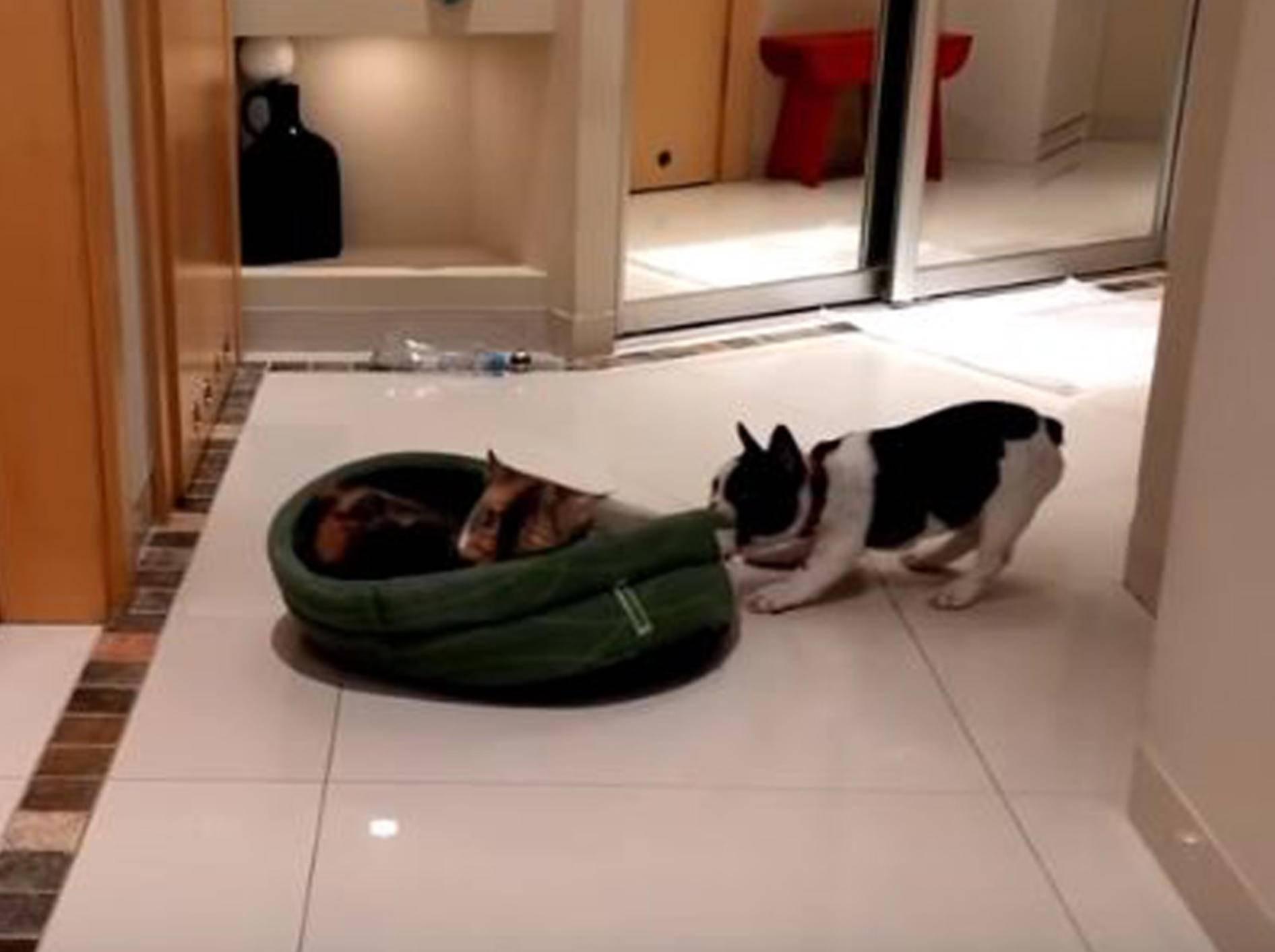 Dieser Hund versucht, sein Bett zurückzuerobern - Bild: YouTube / Rumble Viral